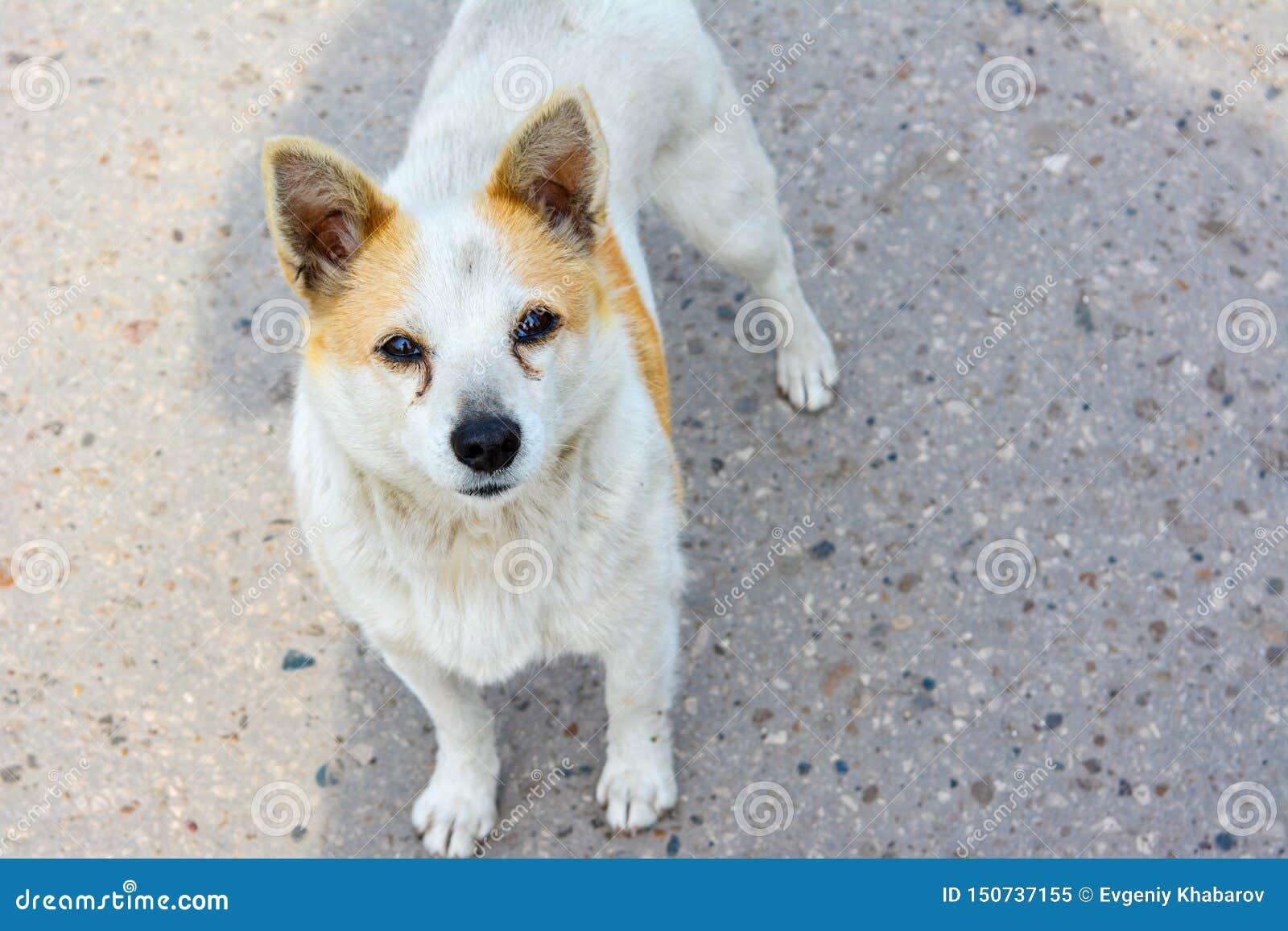 Geinteresseerd kijk van een dakloze hond die zich op de weg bevinden