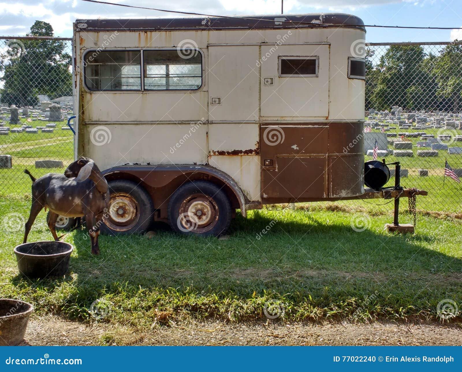 Geit dichtbij een Veeaanhangwagen bij een Markt van de Provincie, Pennsylvania, de V.S.