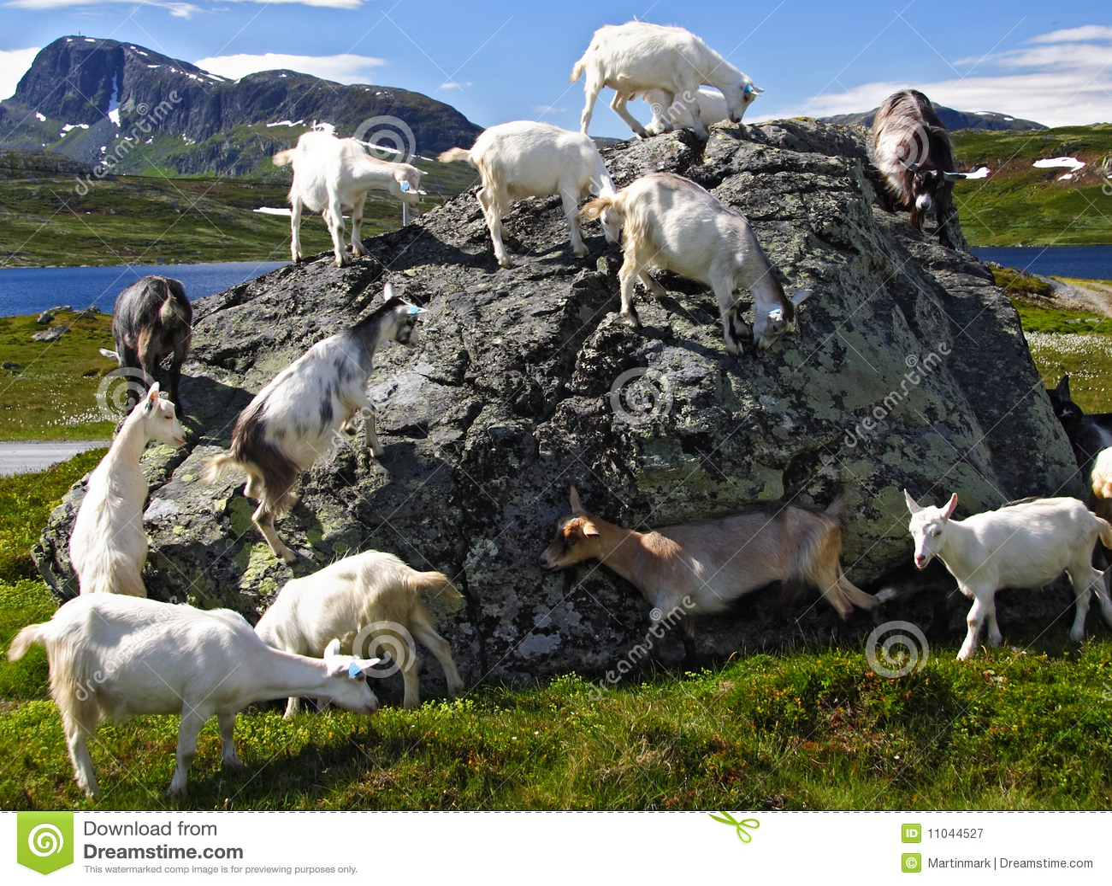 Geiten in Noorwegen