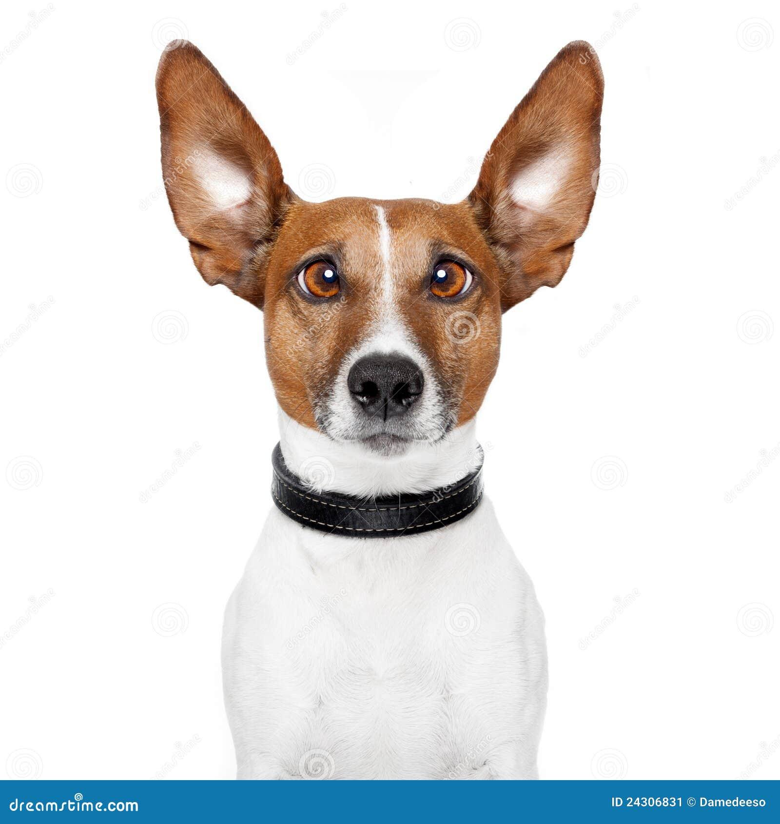 Gekke hond met grote luie ogen stock afbeelding afbeelding 24306831 - Ogen grappig ...