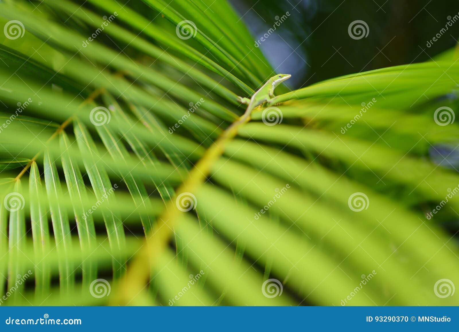 Gekko het ontspannen op groen tropisch blad