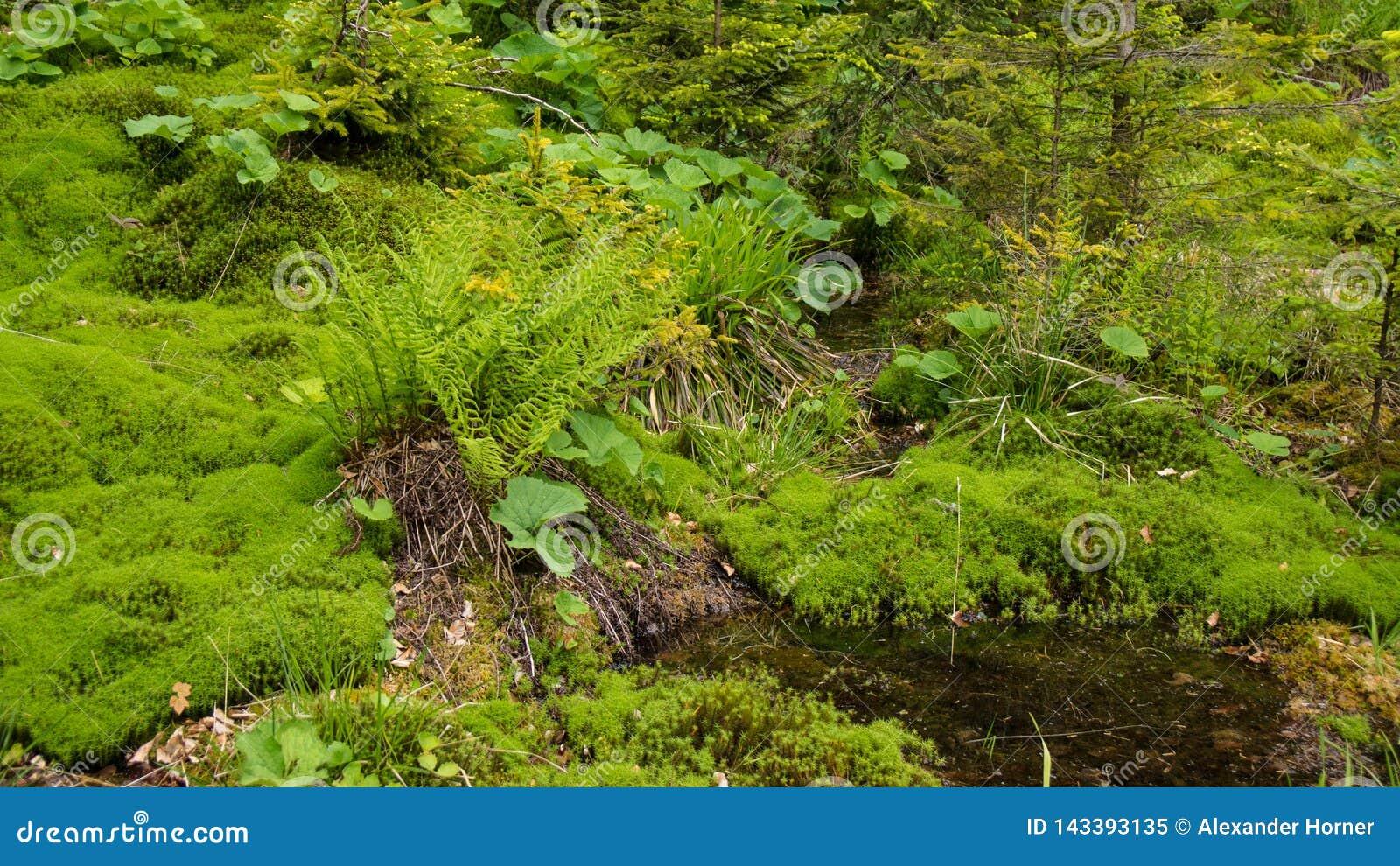 Gekrümmter Fluss durch Moosbett