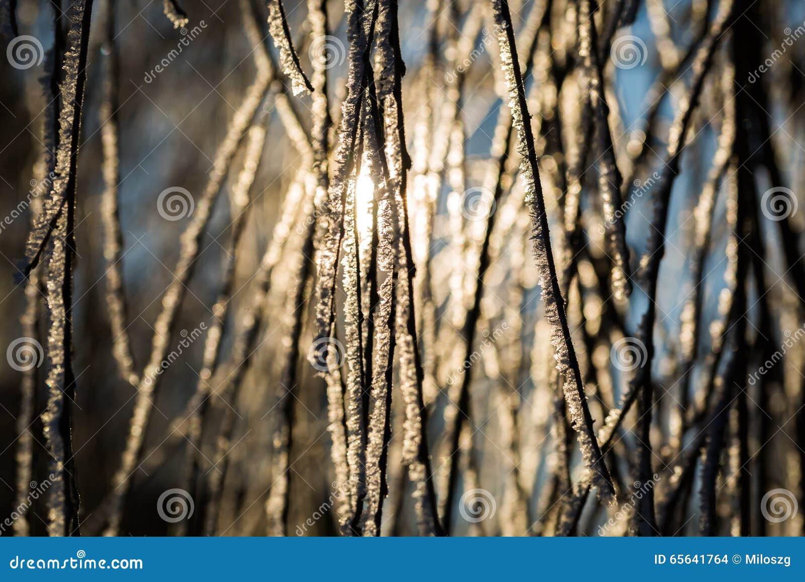 Gelée sur la branche d arbre dans la fin