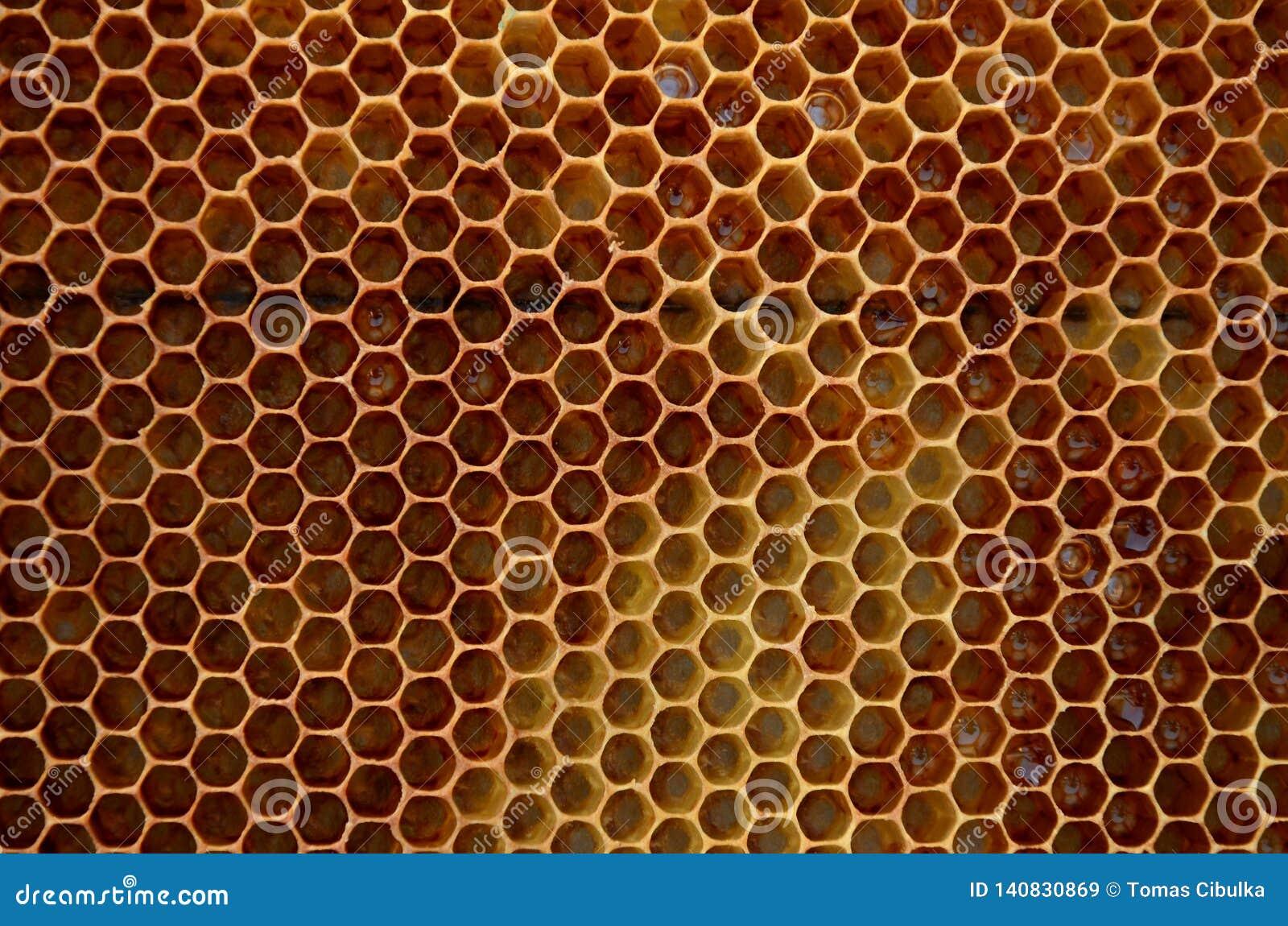 Gelb-braune Hexagone der Bienenwabe