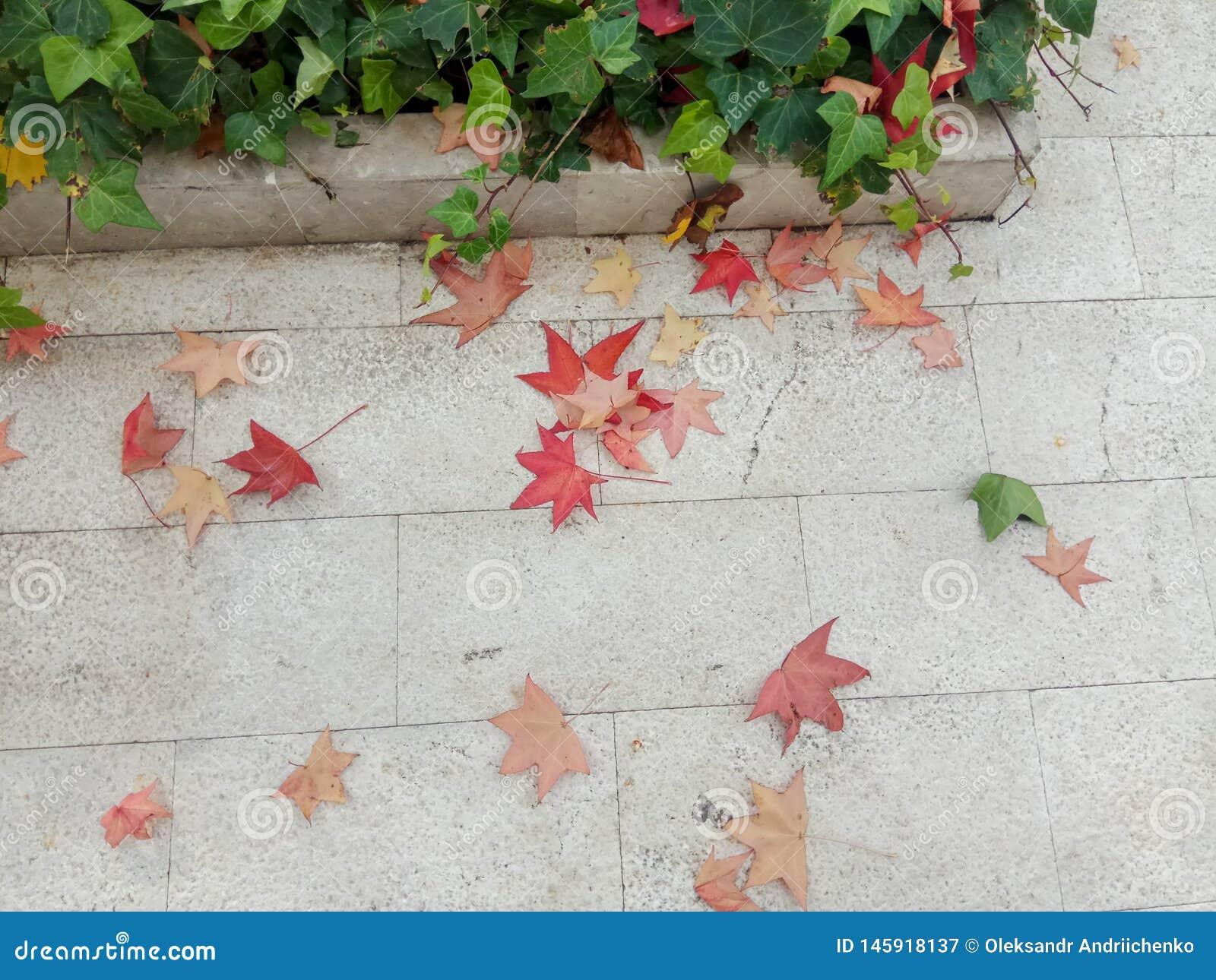 Gelb gefallener Autumn Leaves auf dem an B?rgersteig gepflastert mit Gray Concrete Paving Stones- und Gras-Rasen-Draufsicht