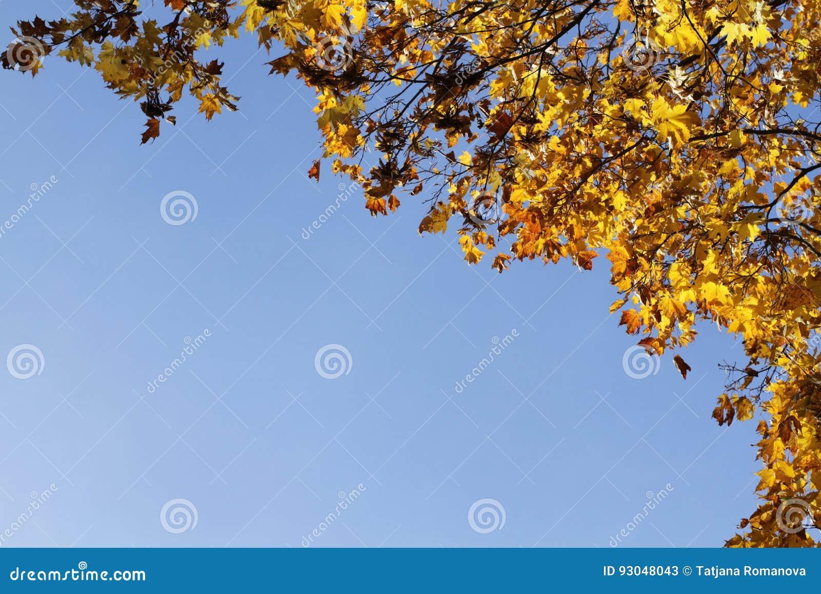 Gelbe Blätter des Herbstes auf blauem Himmel