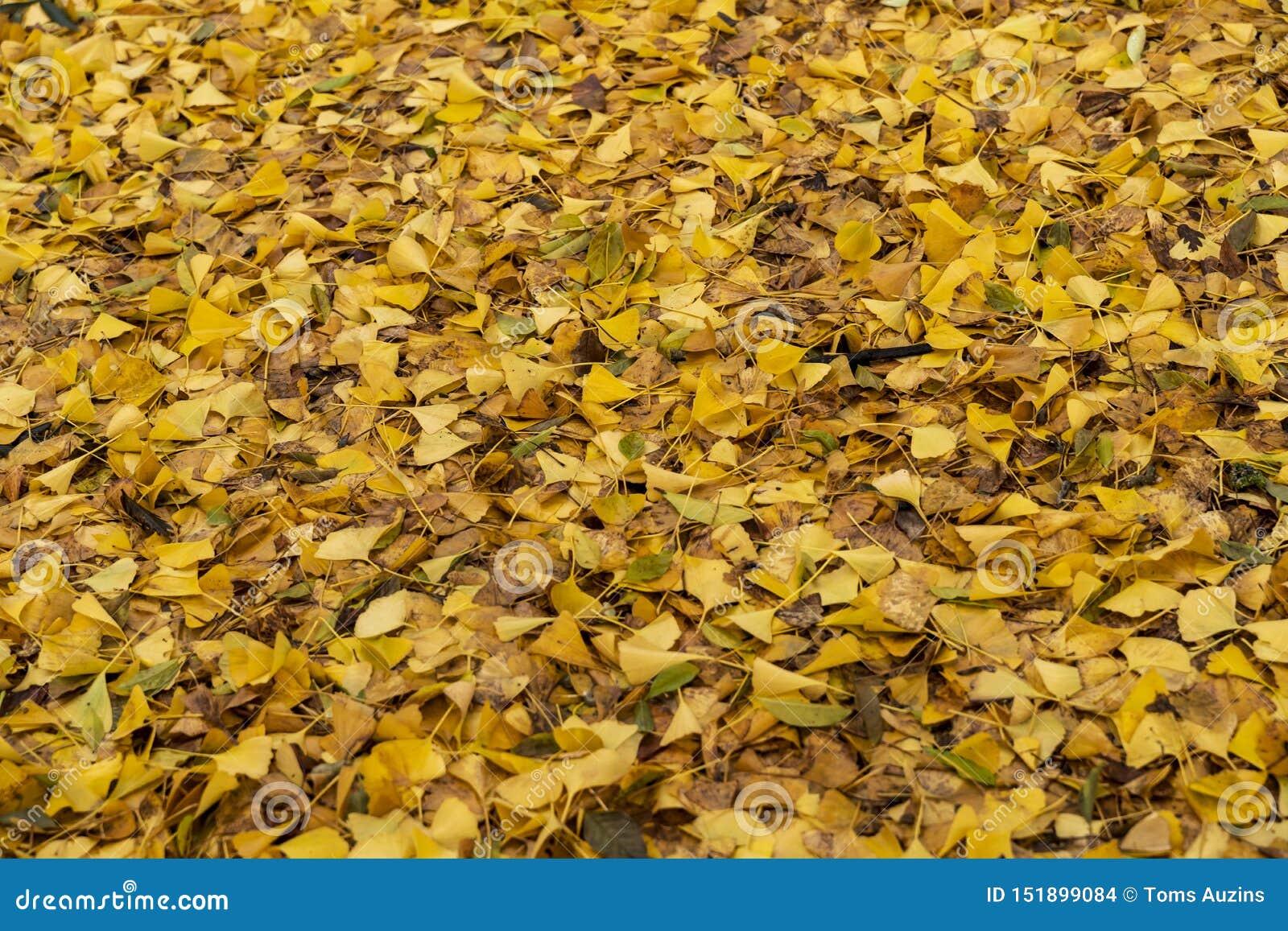 Gelbe Blätter in Kew-Gärten im Winter/im Herbst