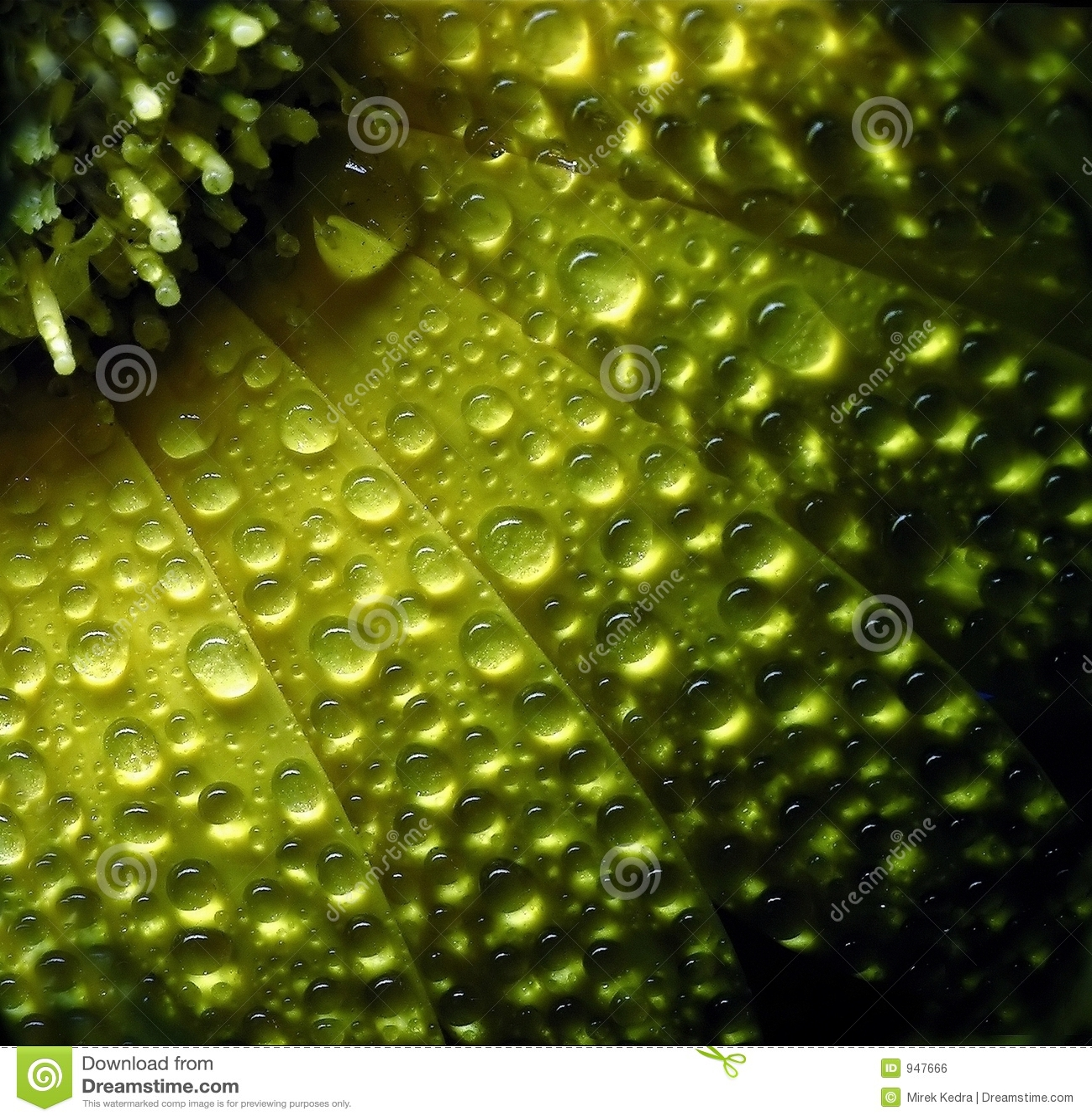 Gelbe Blume nach Regen