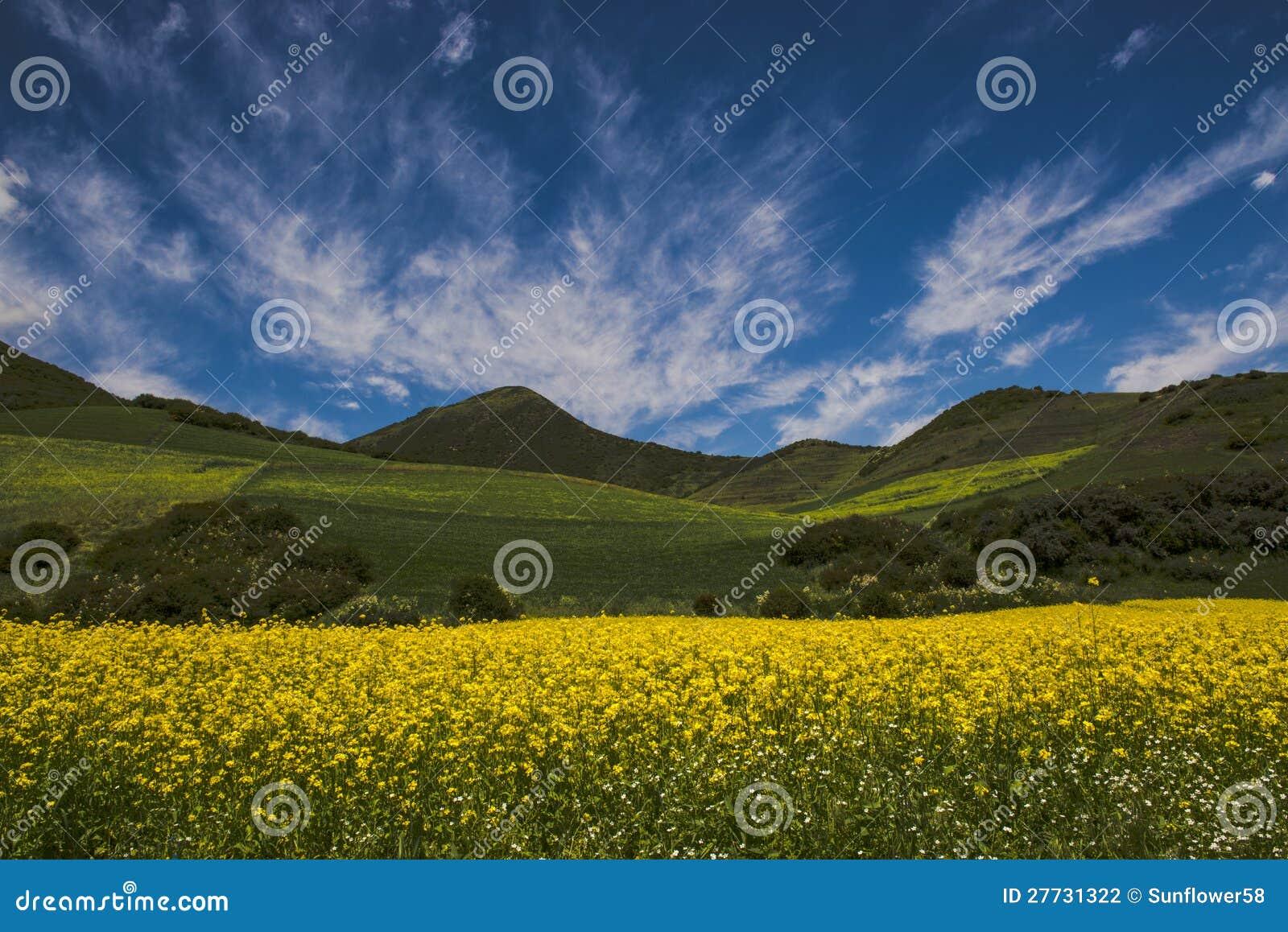 Gelbe Blume unter den Wolken