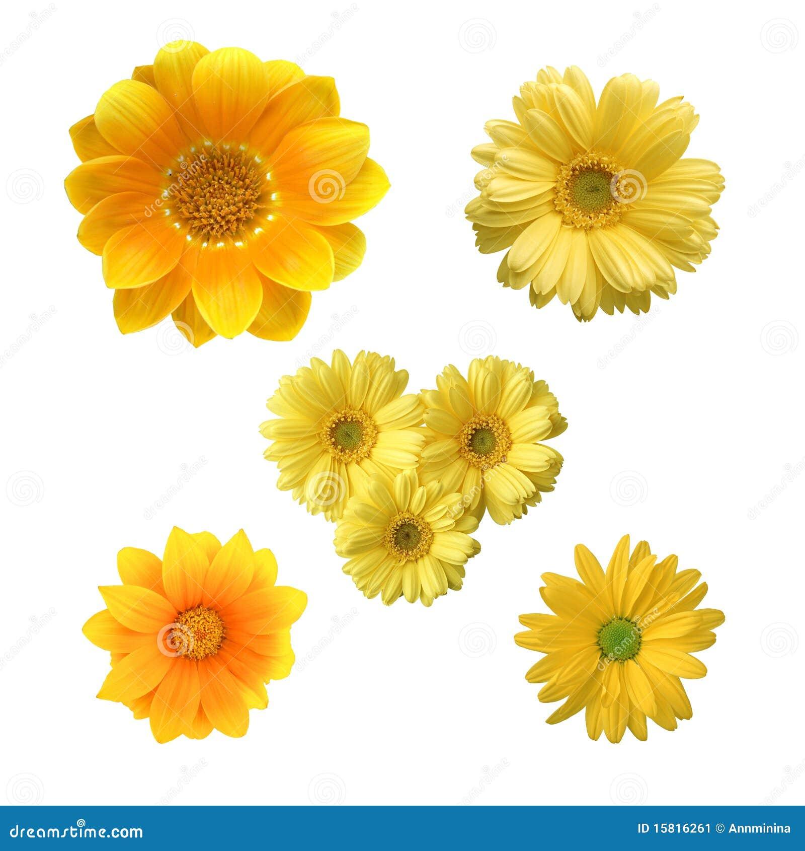 gelbe blumen stockbild bild von garten fr hling bunt 15816261. Black Bedroom Furniture Sets. Home Design Ideas