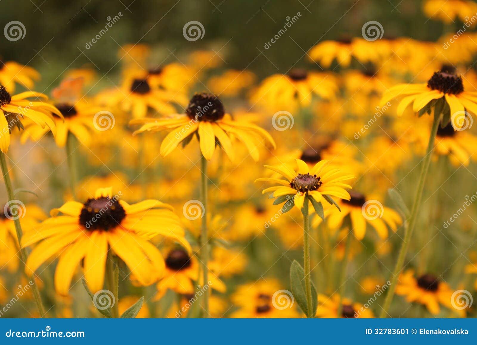 gelbe blumen stockbild bild von hell obstgarten biene. Black Bedroom Furniture Sets. Home Design Ideas
