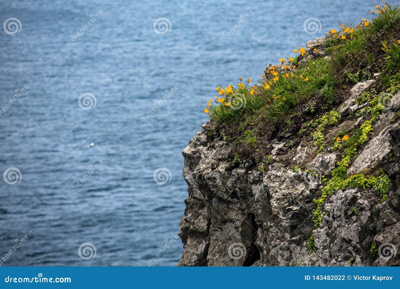 Gelbe Blumen auf der Spaltung gegen das Meer