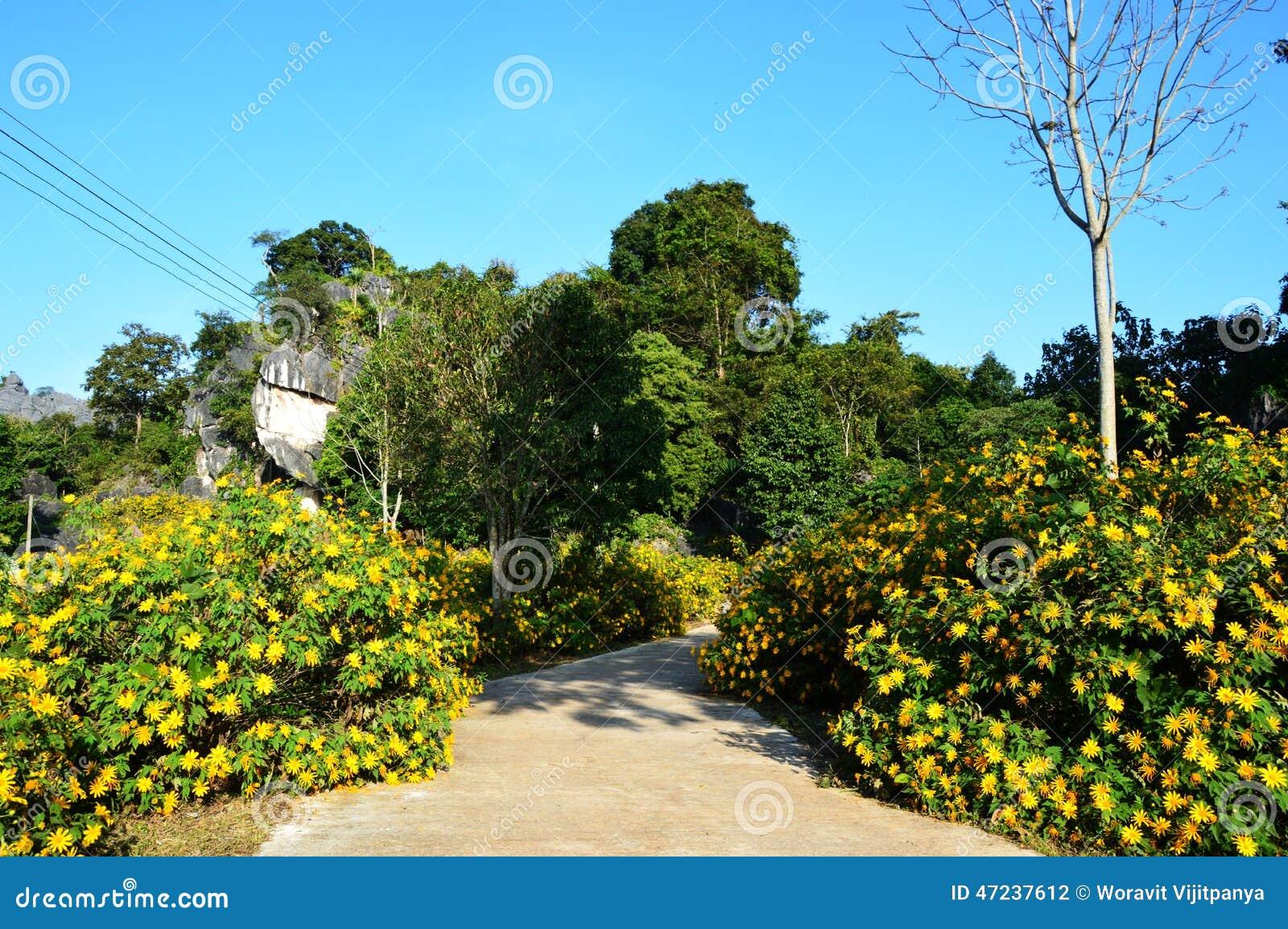 Gelbe Blumen Im Steingarten Stockfoto - Bild von blatt, klein: 47237612