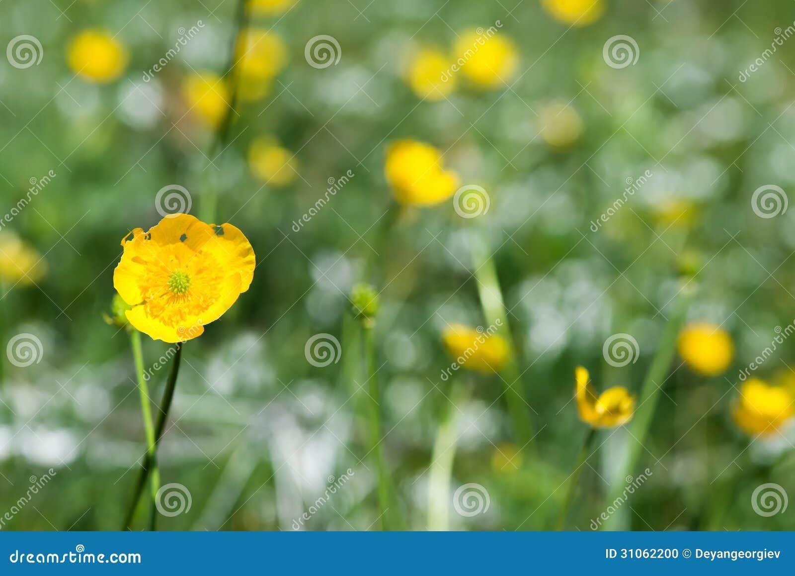 gelbe fr hlingsblumen stockfoto bild 31062200. Black Bedroom Furniture Sets. Home Design Ideas