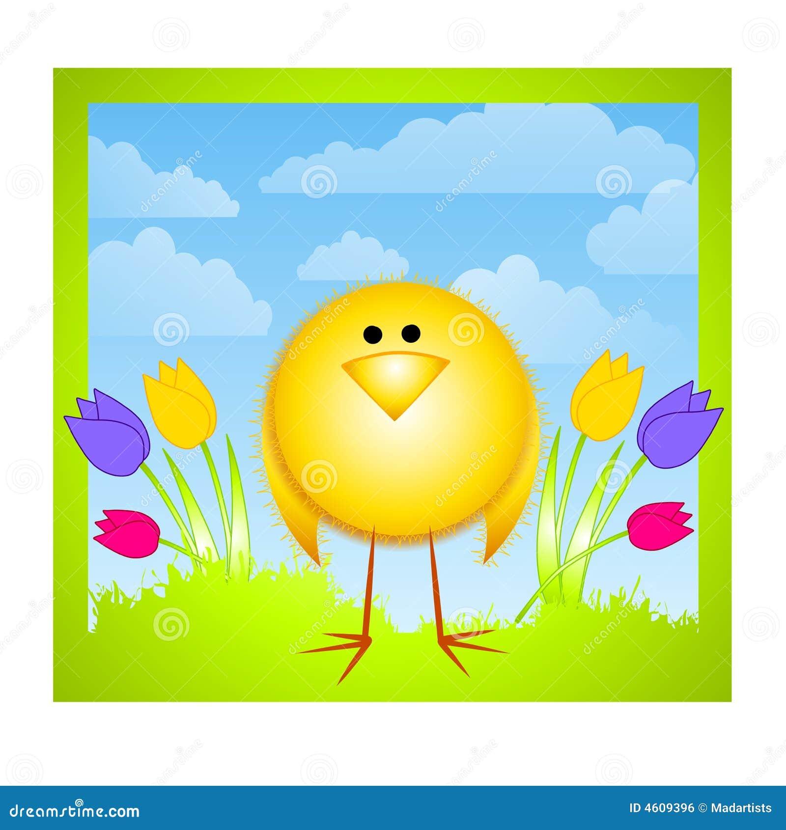 Gelbe Küken-Tulpen und Frühlings-Himmel