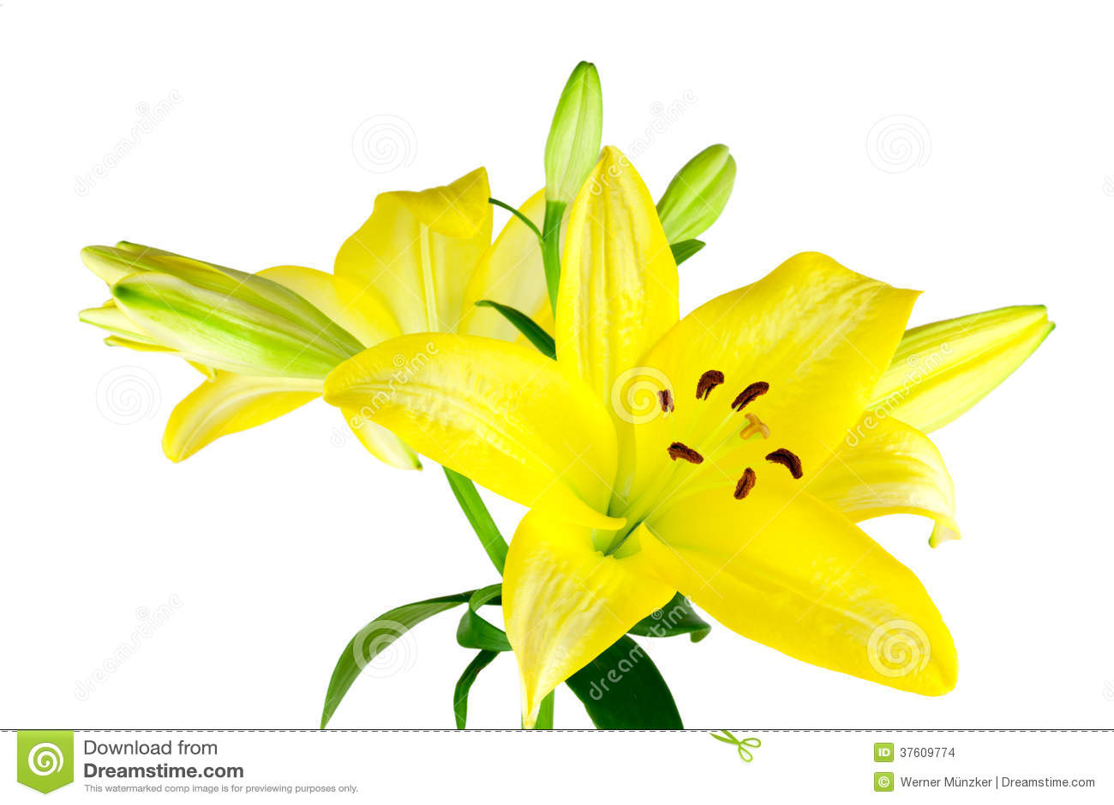 gelbe lilien stockbilder bild 37609774. Black Bedroom Furniture Sets. Home Design Ideas