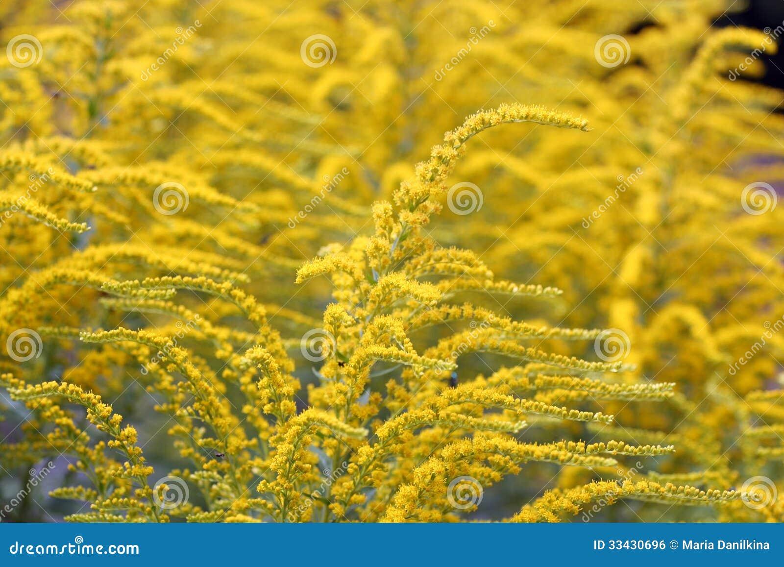 gelbe sommerblumen lizenzfreies stockbild bild 33430696. Black Bedroom Furniture Sets. Home Design Ideas