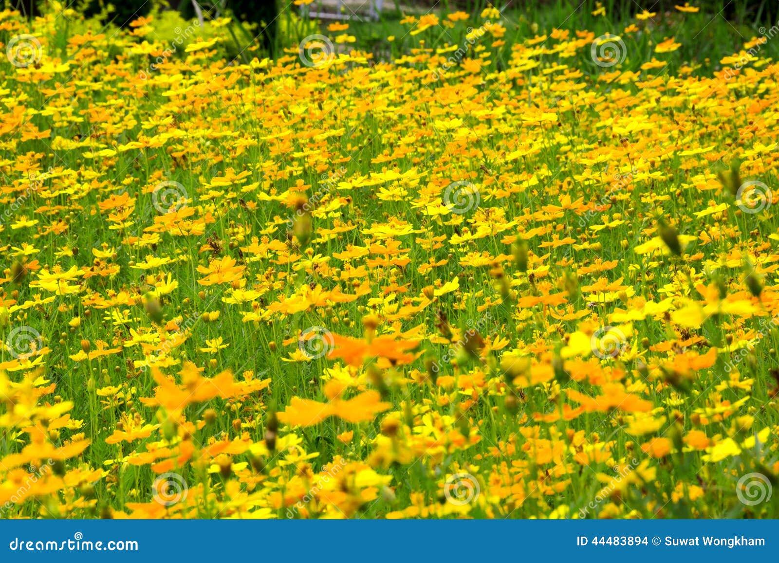 gelbe sommerblumen stockfoto bild von nadel blume fields 44483894. Black Bedroom Furniture Sets. Home Design Ideas