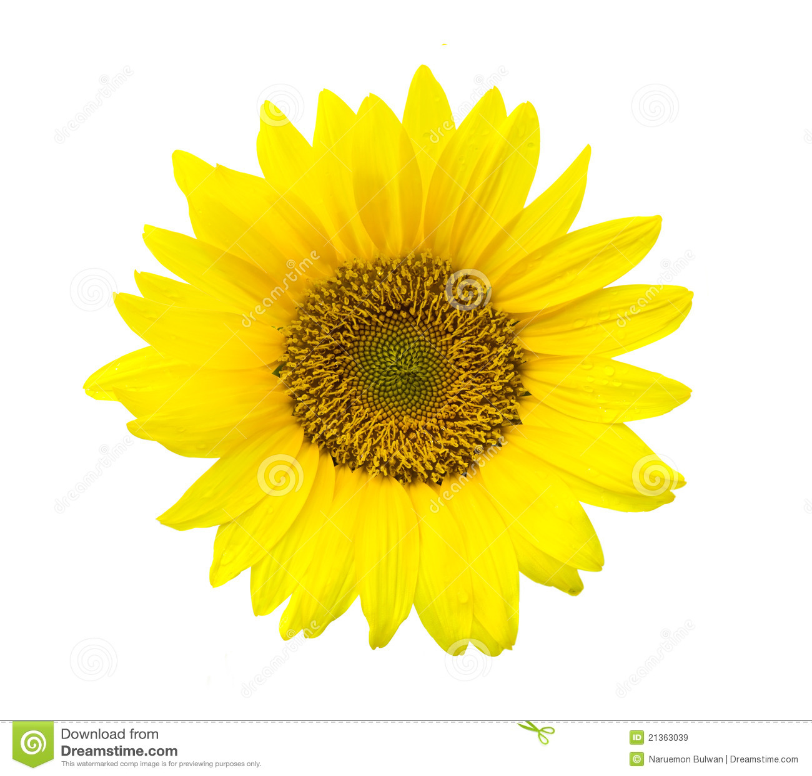 gelbe sonnenblume stockbild bild von wei hell bl te 21363039. Black Bedroom Furniture Sets. Home Design Ideas
