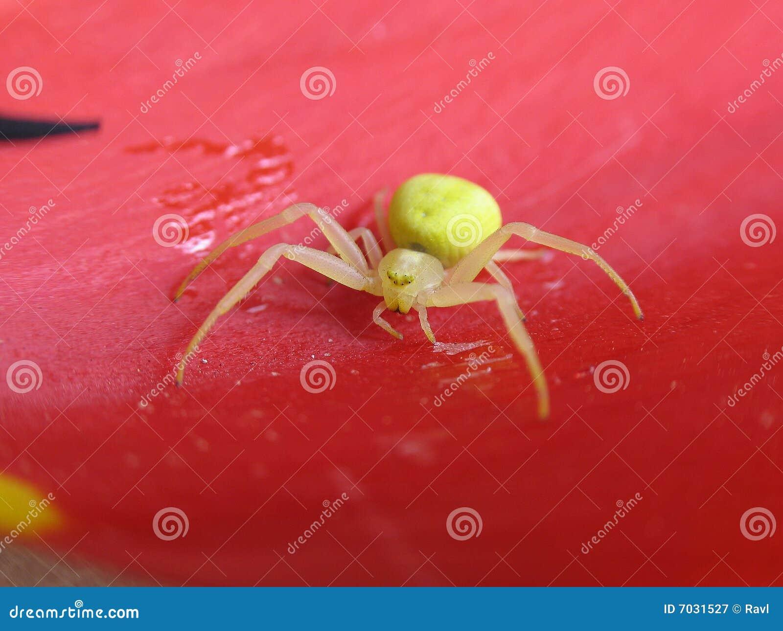 gelbe spinne lizenzfreie stockfotografie bild 7031527. Black Bedroom Furniture Sets. Home Design Ideas