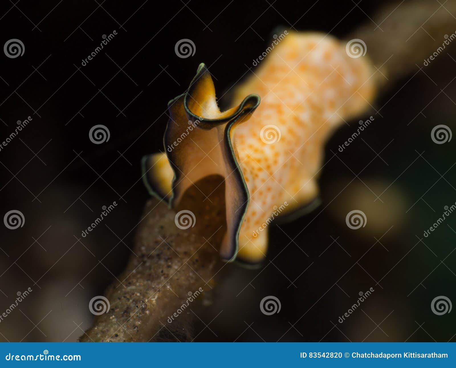 Gelber flacher Wurm