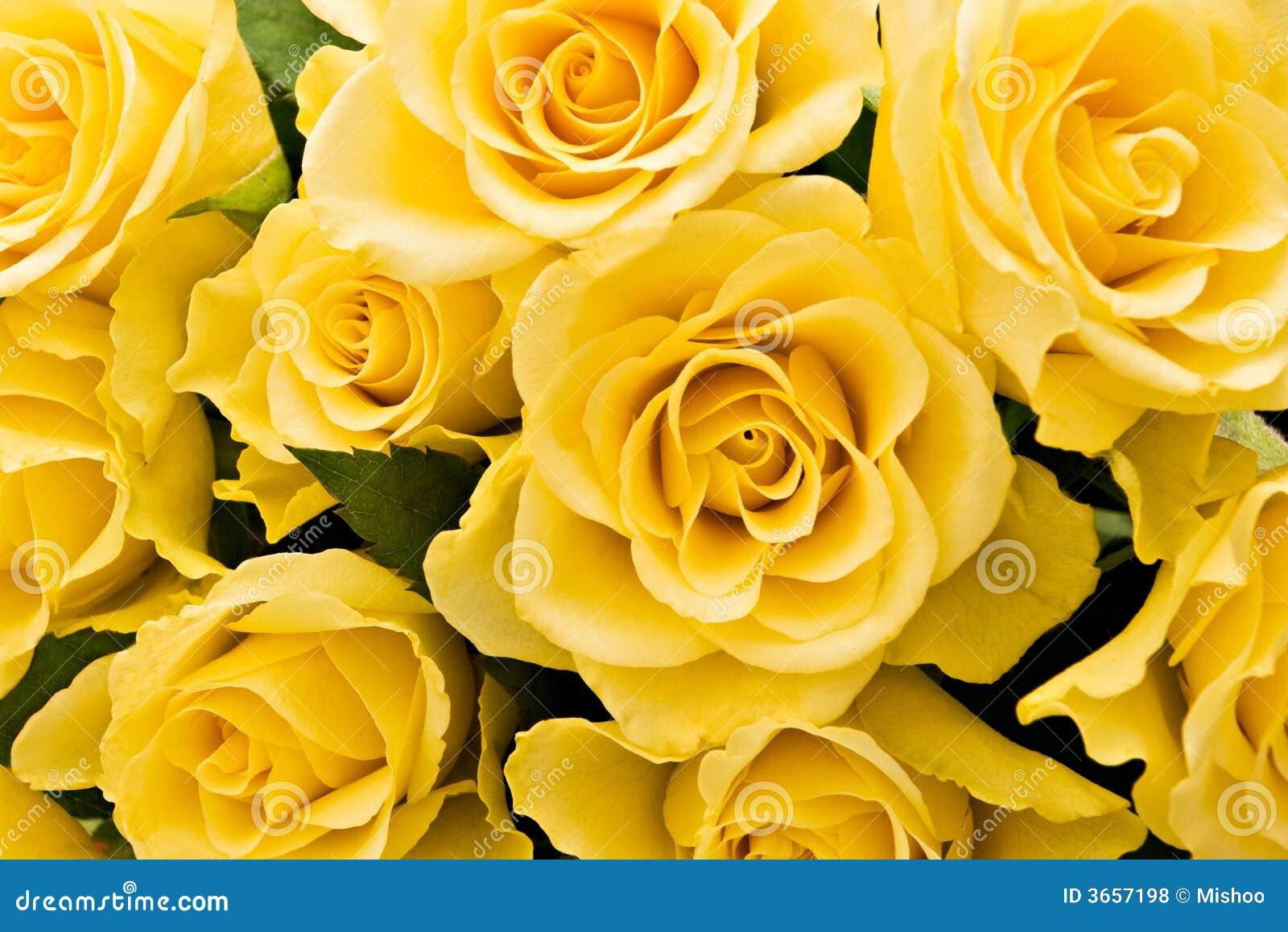 Gelber hintergrund tumblr