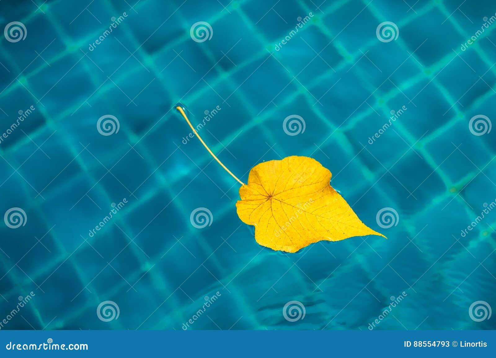 Gelbes Blatt Im Pool, Blauer Hintergrund Minimalismus Herbst Färbt ...
