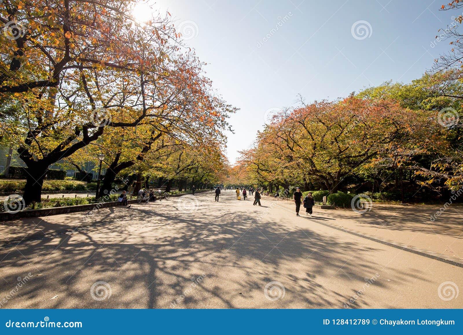 Gelbes Blatt von Ahornen im Herbst an Ueno-Park