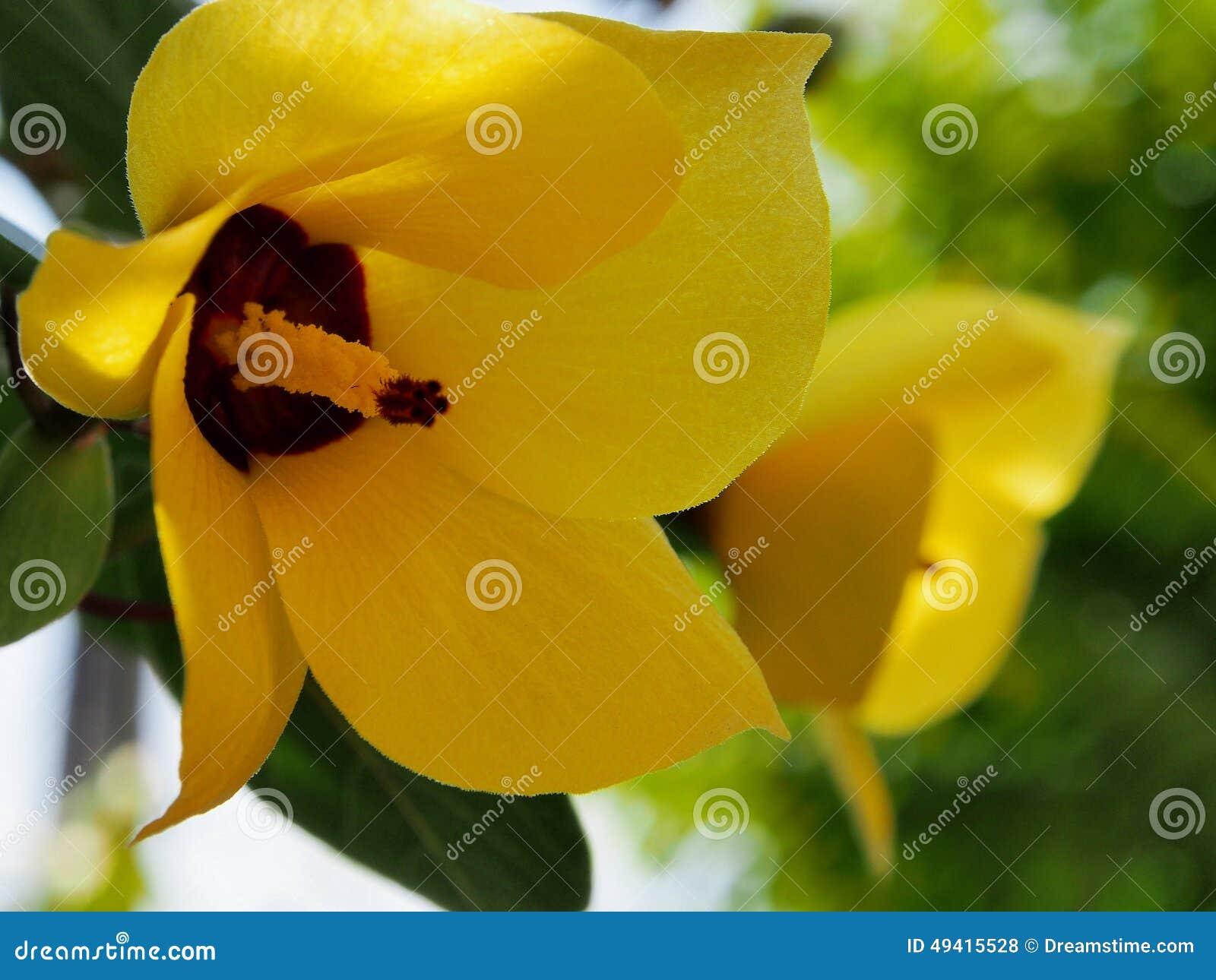 Download Gelbes Blumenmakro stockfoto. Bild von makro, frech, nave - 49415528