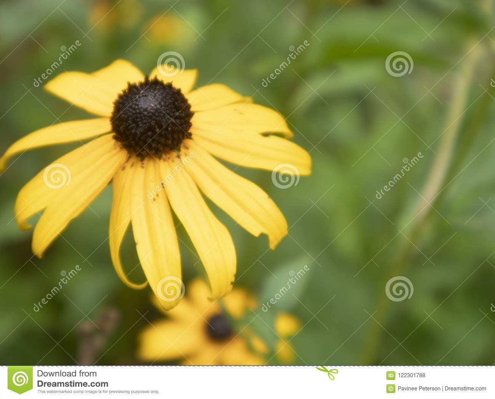 Gelbes Blumenschwarzes gemustert
