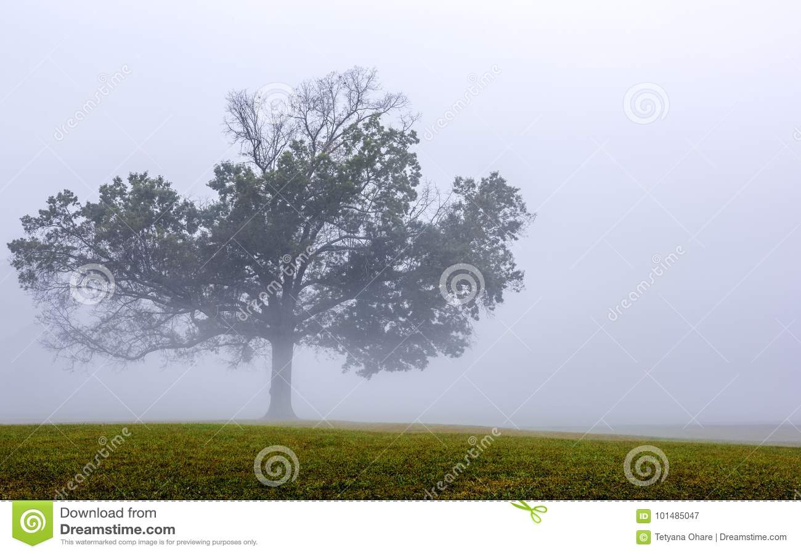 Gelbes Feld, einsamer Baum, bewölkter blauer Himmel