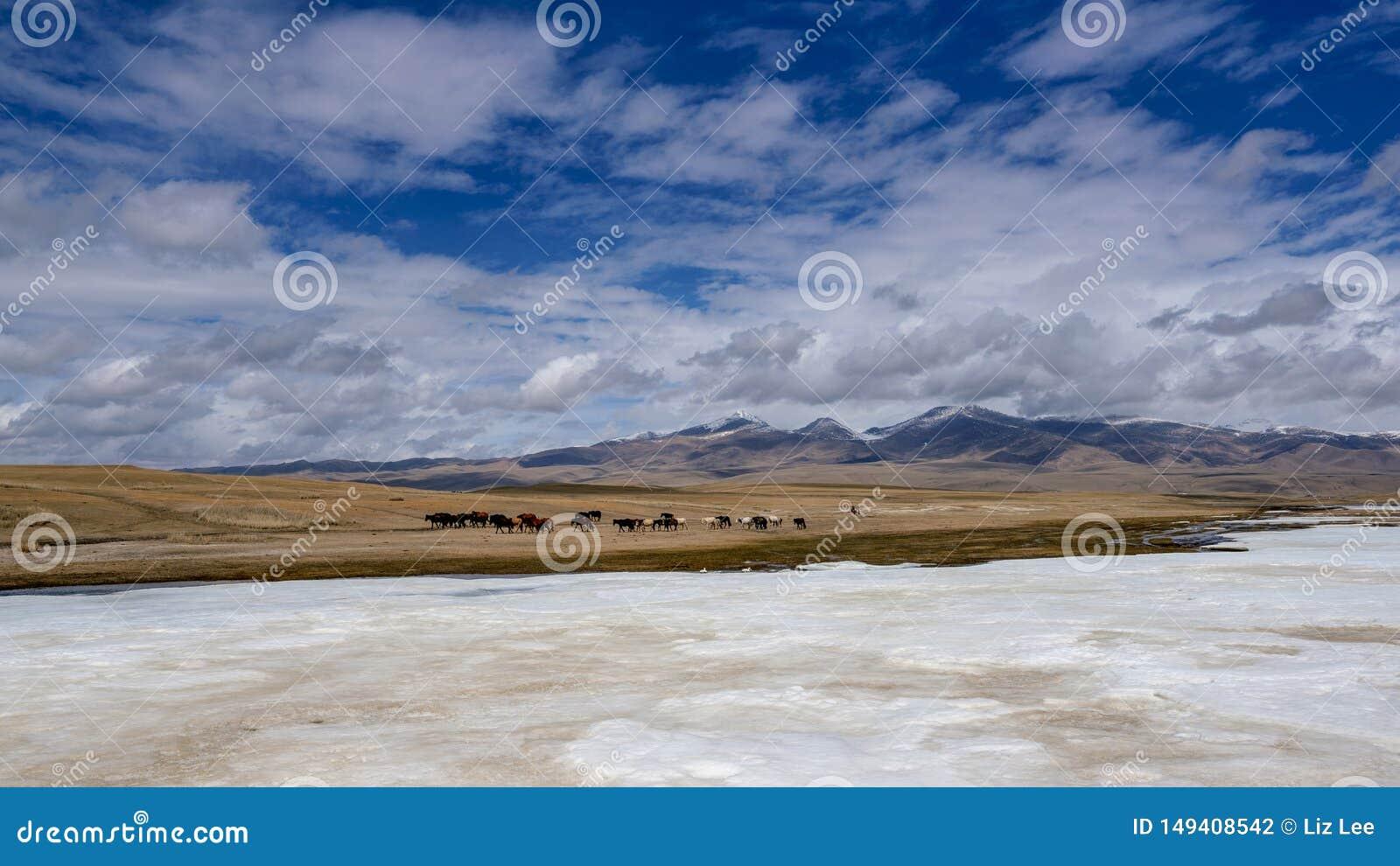 Gelbgras Fluss der Pferdeschwäne und der weißen Wolken des blauen Himmels gefrorenes in Bayanbulak im Frühjahr