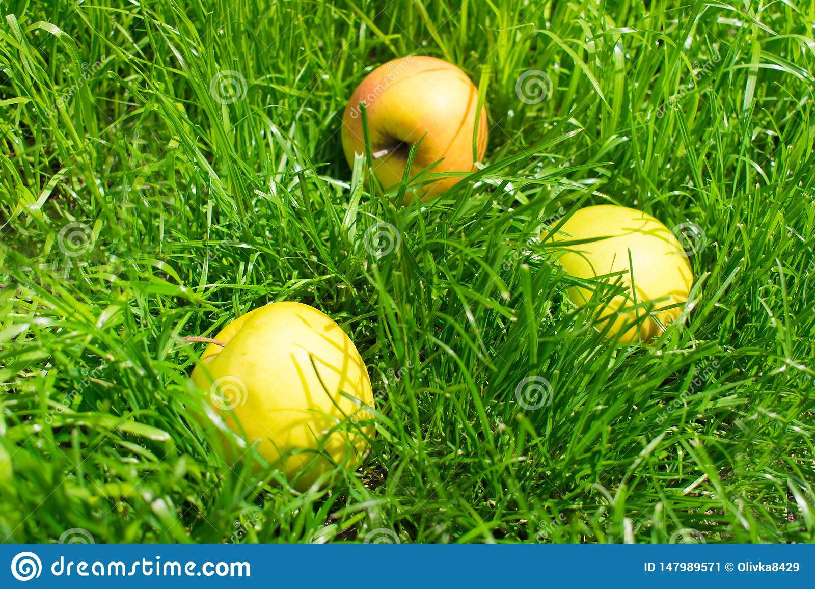 Gele appelen op groen gras