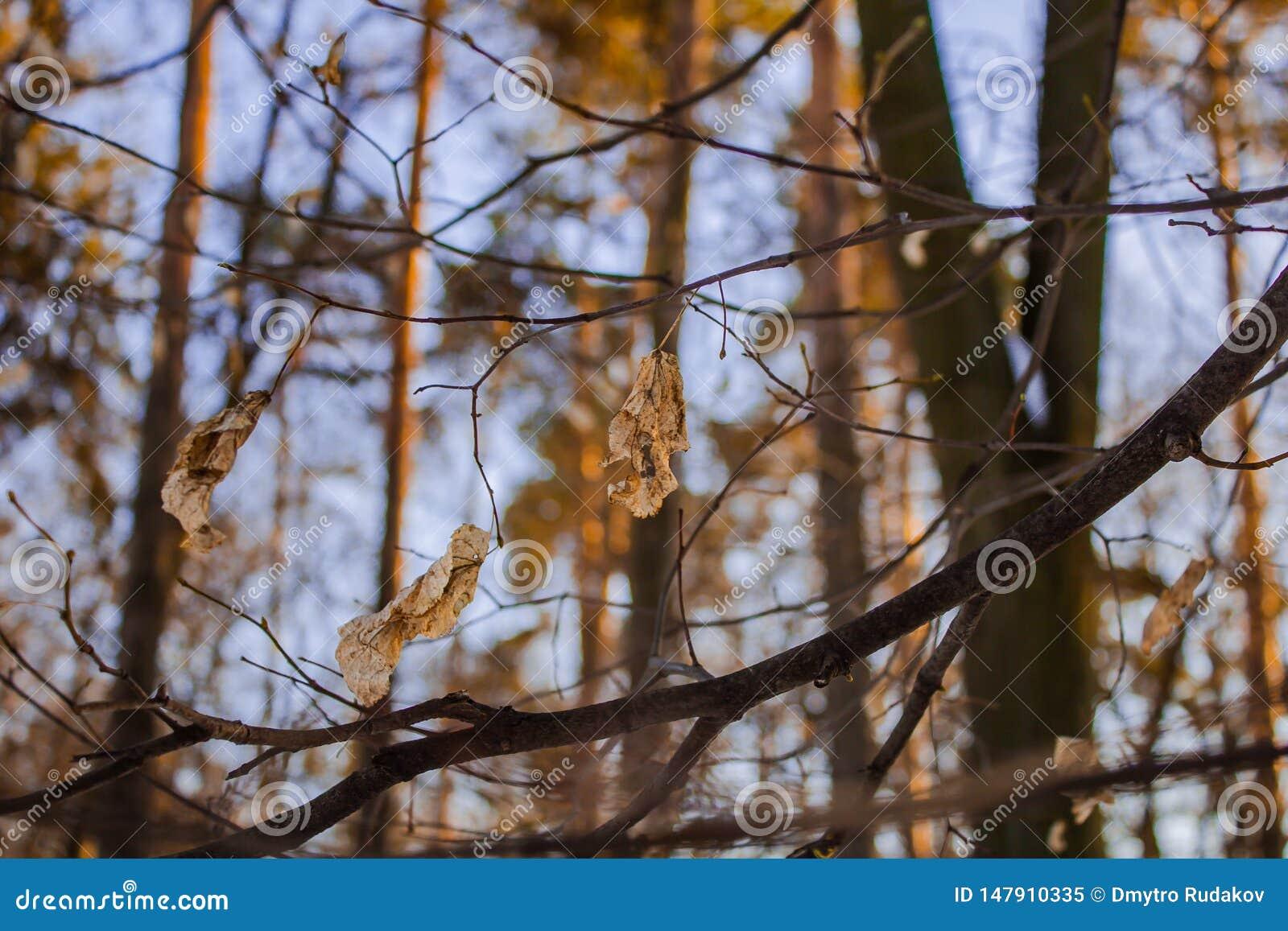 Gele bladeren op de achtergrond van de hemel