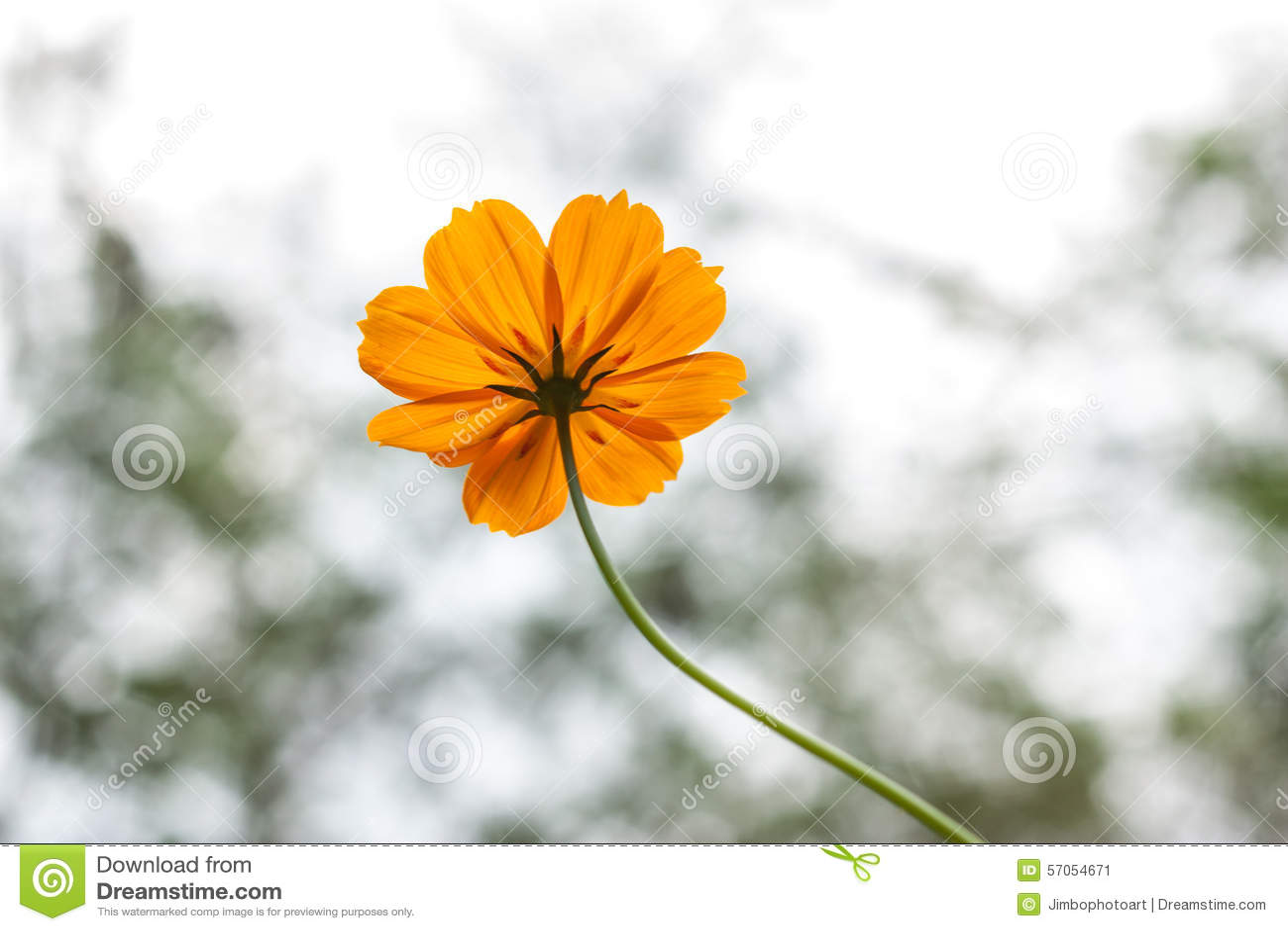 Gele bloem met bokehlicht