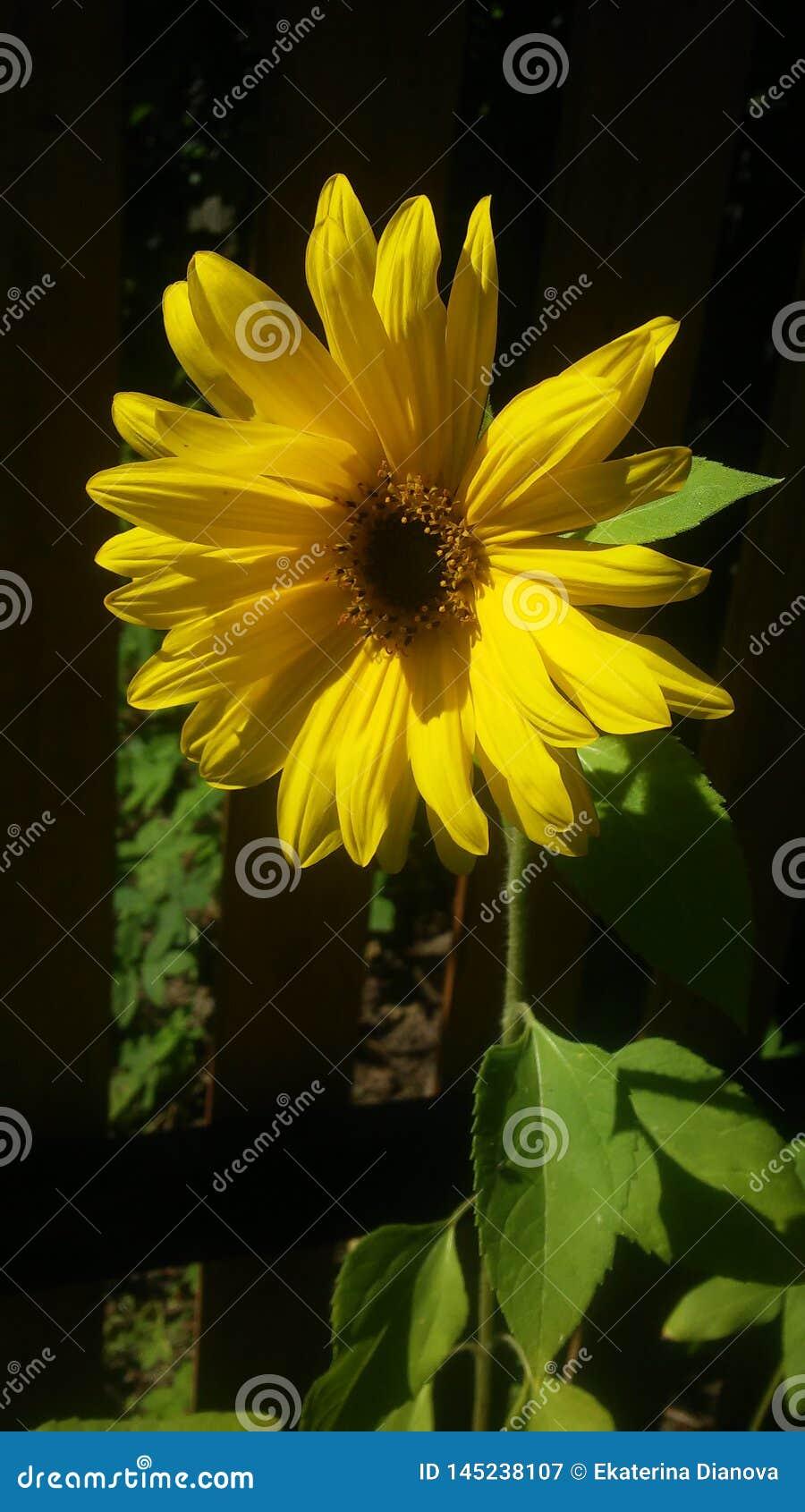 Gele bloem op de groene achtergrond