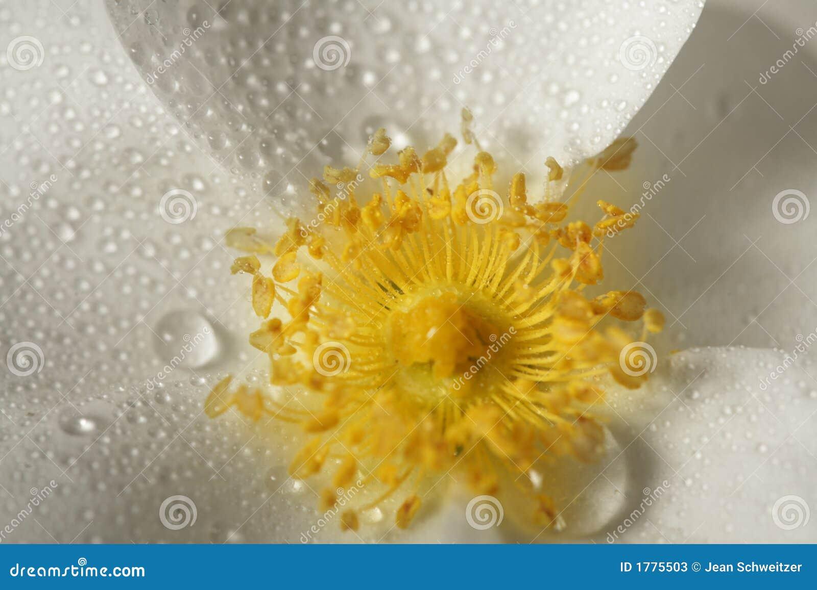 Gele bloemclose-up