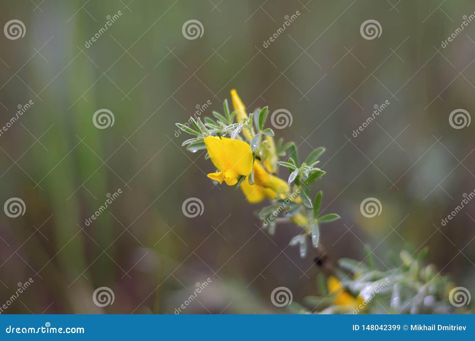 Gele bloemclose-up vage randen