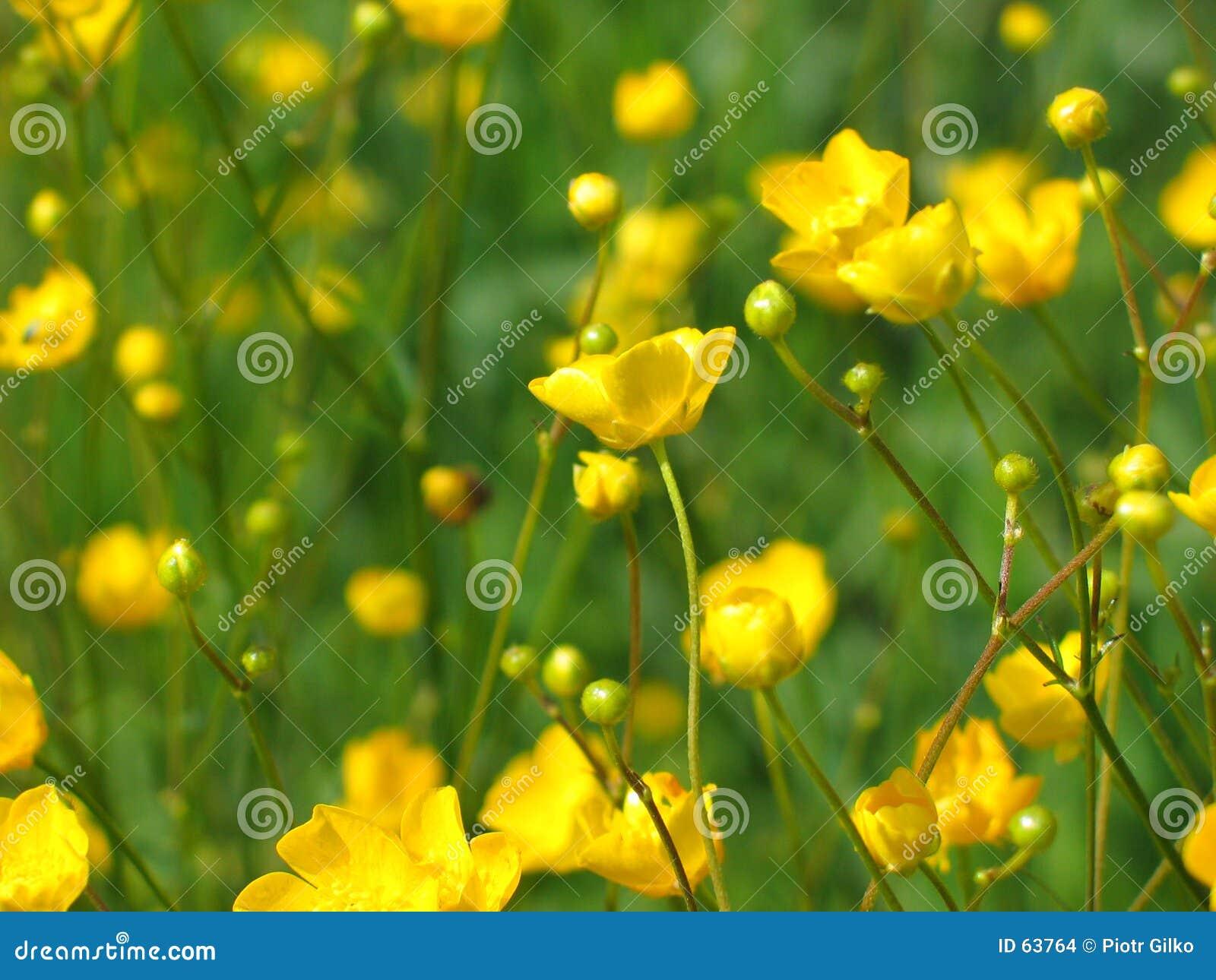 Gele bloemen.