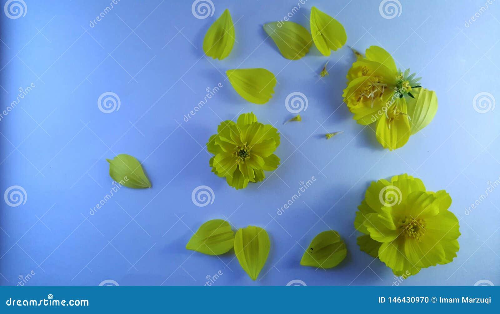 Gele bloemen op de witte geweven achtergrond