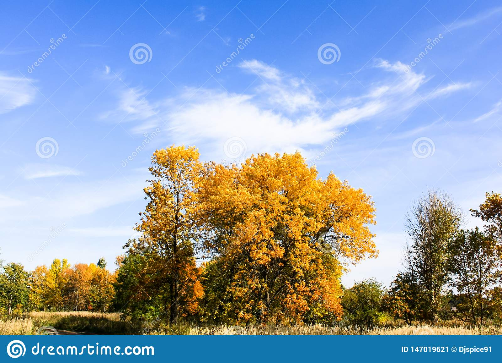 Gele bomen tegen blauwe hemel