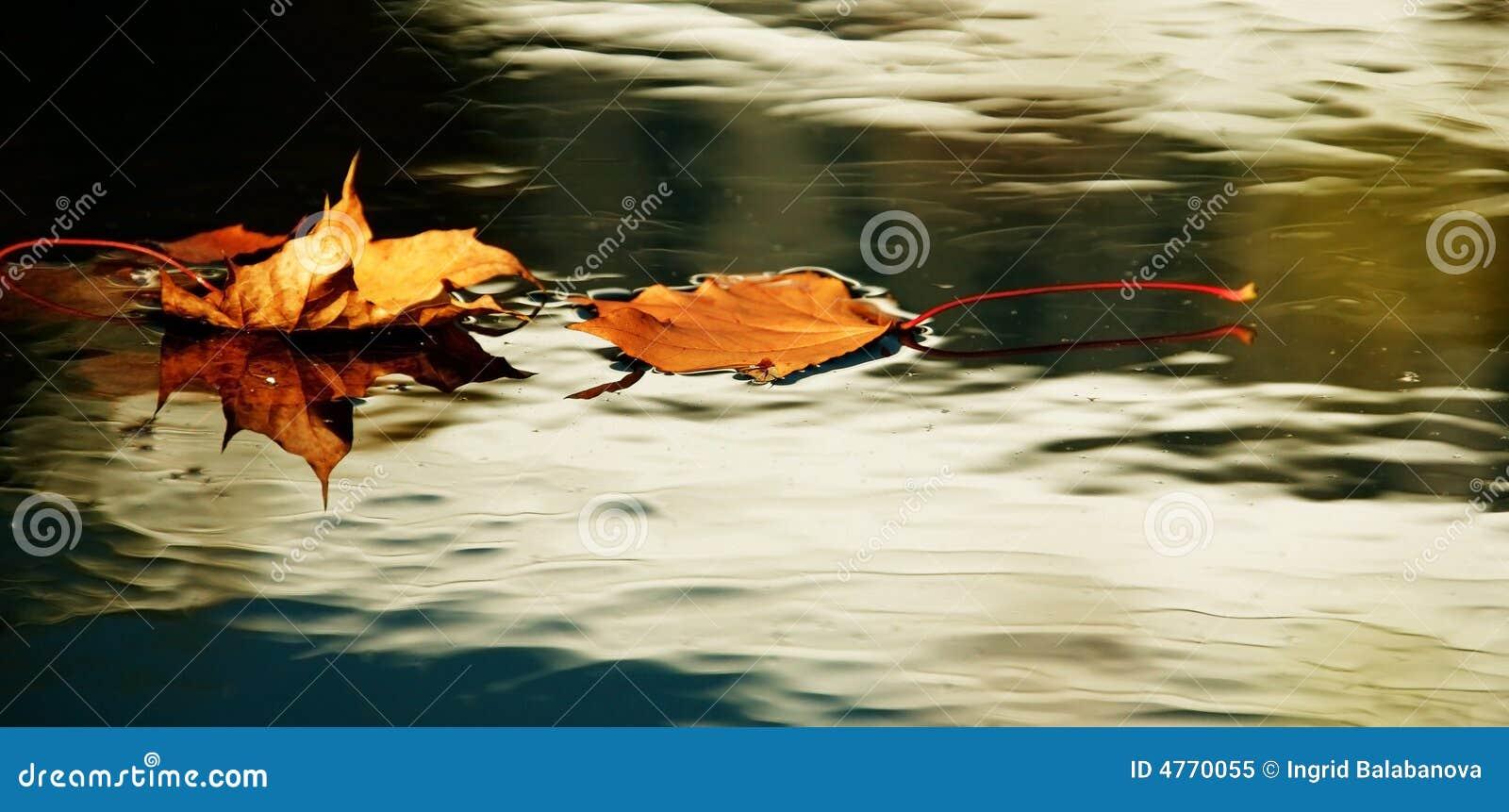 Gele de herfstbladeren