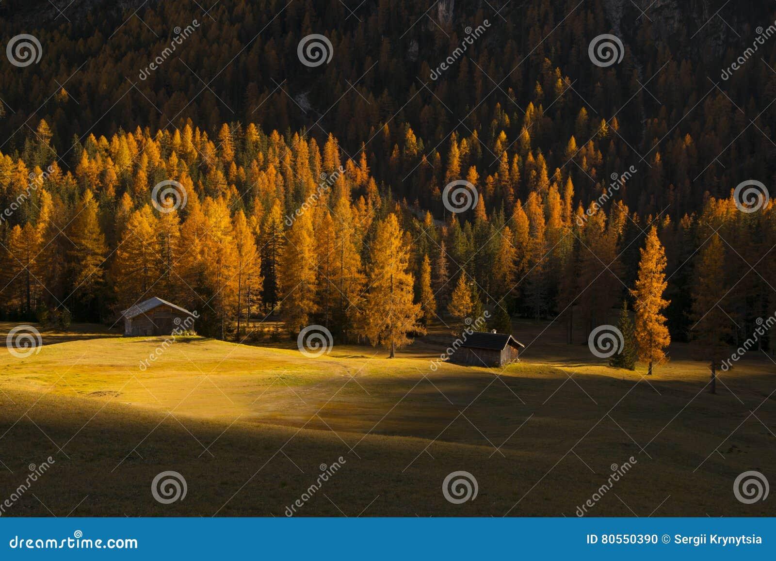 Gele Die Lariksen Door De Het Toenemen Zon, Dolomiet, Italië Worden ...