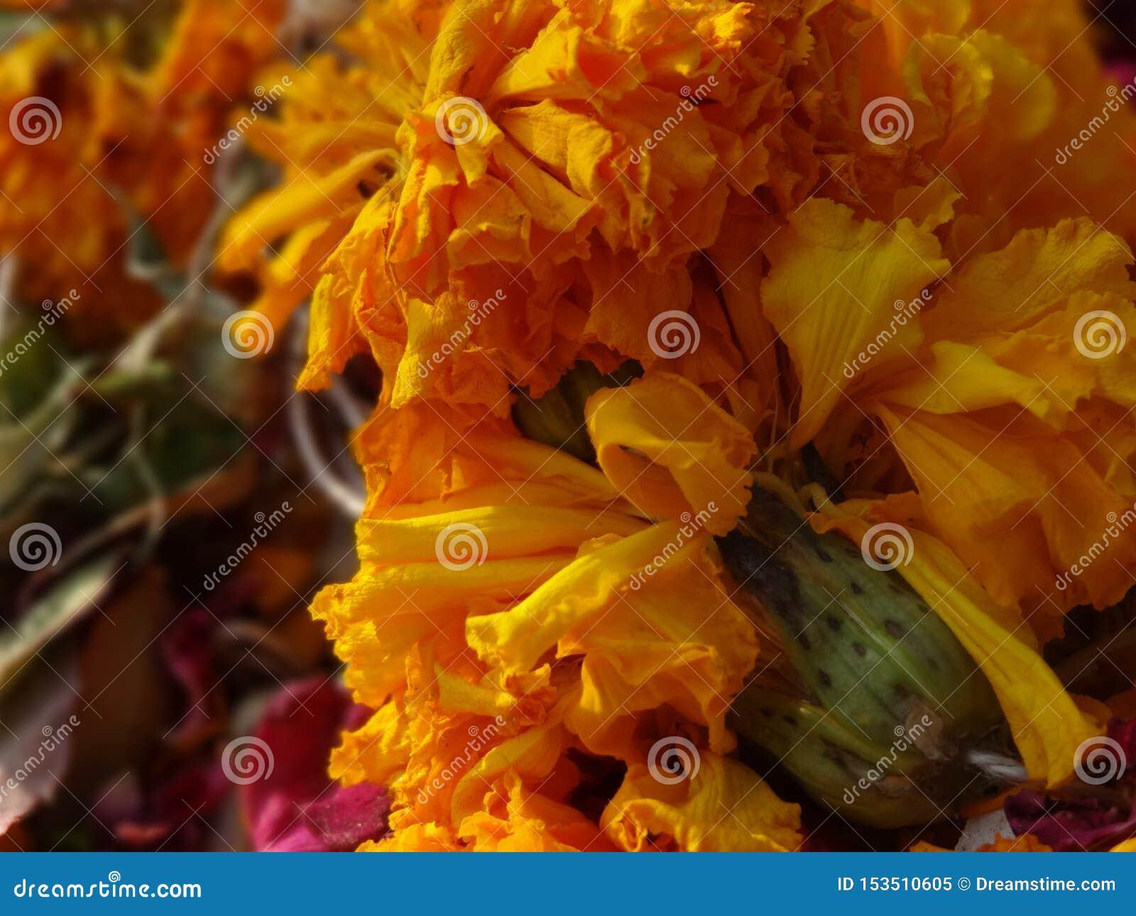 Gele en gele rozen met stammen