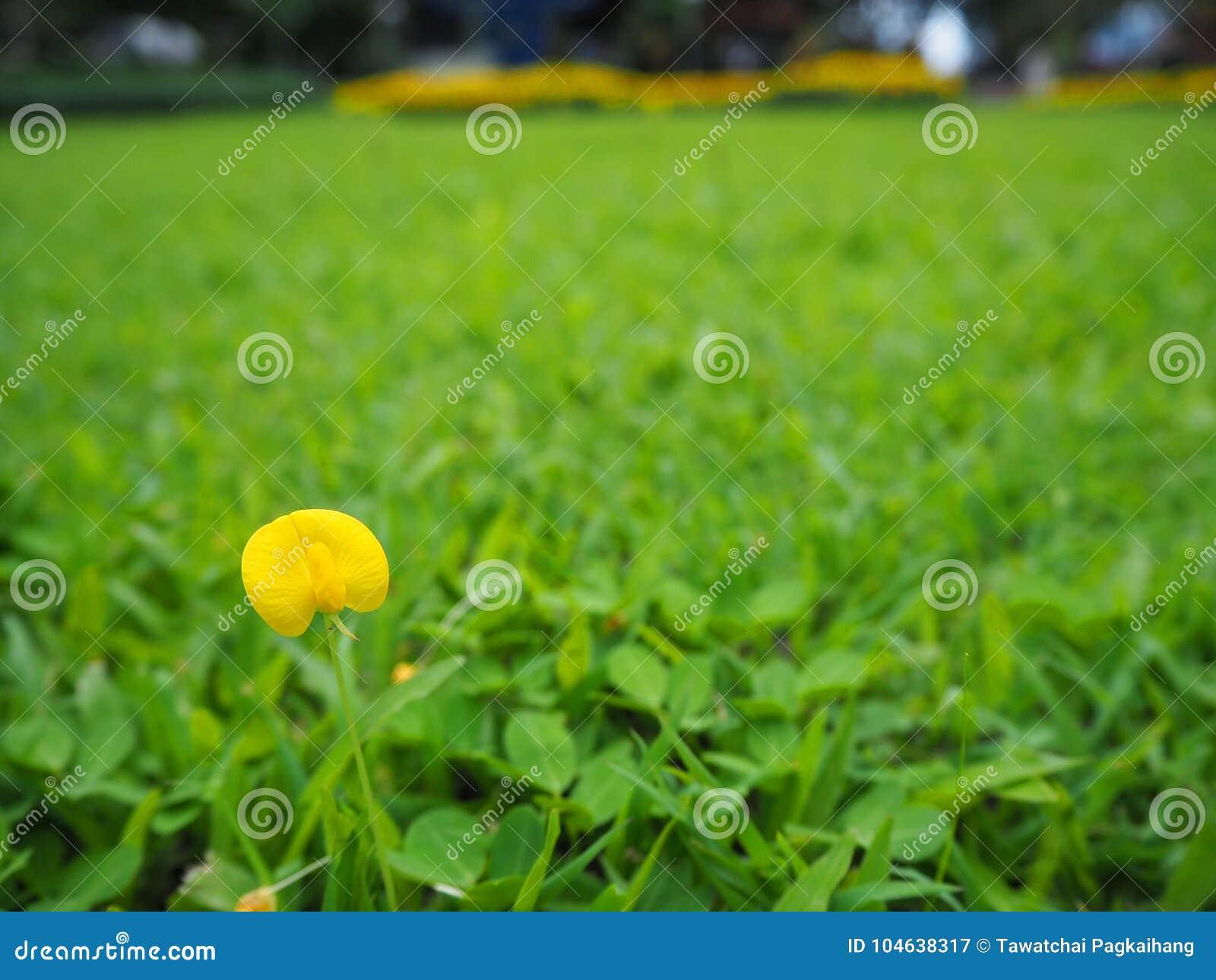 Download Gele grasbloemen stock afbeelding. Afbeelding bestaande uit bloemen - 104638317