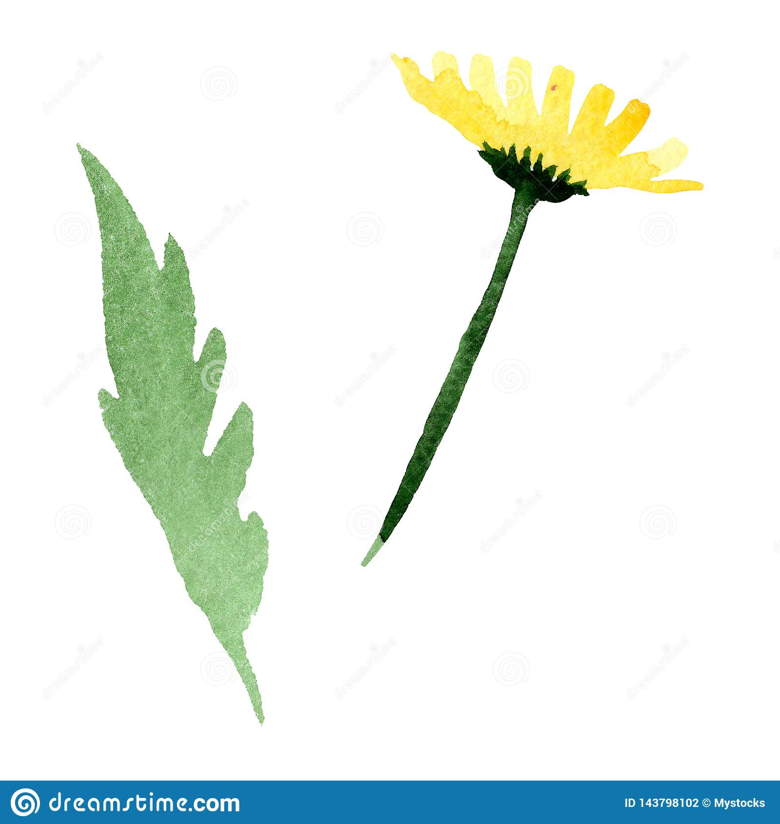 Gele madeliefje bloemen botanische bloem Waterverf achtergrondillustratiereeks Geïsoleerd daisybushes illustratieelement