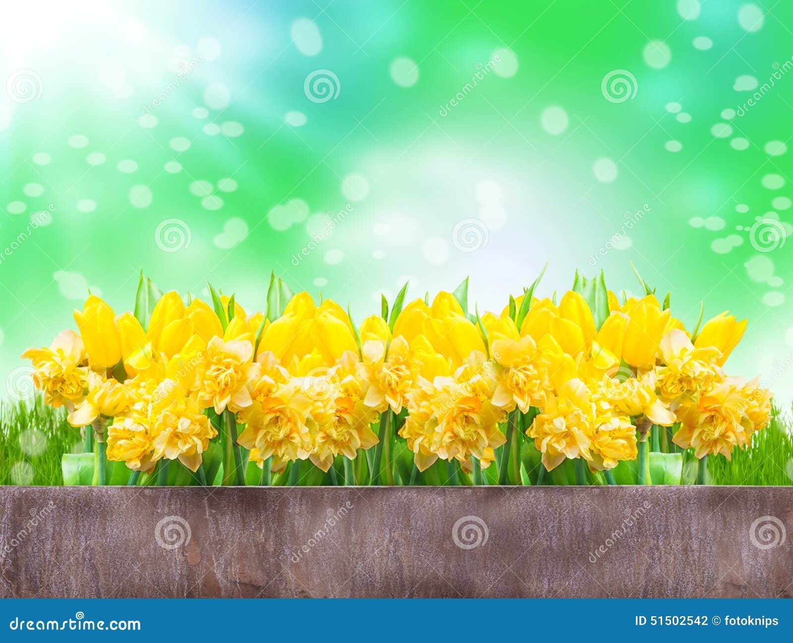 Gele narcissen, tulpen, bokeh