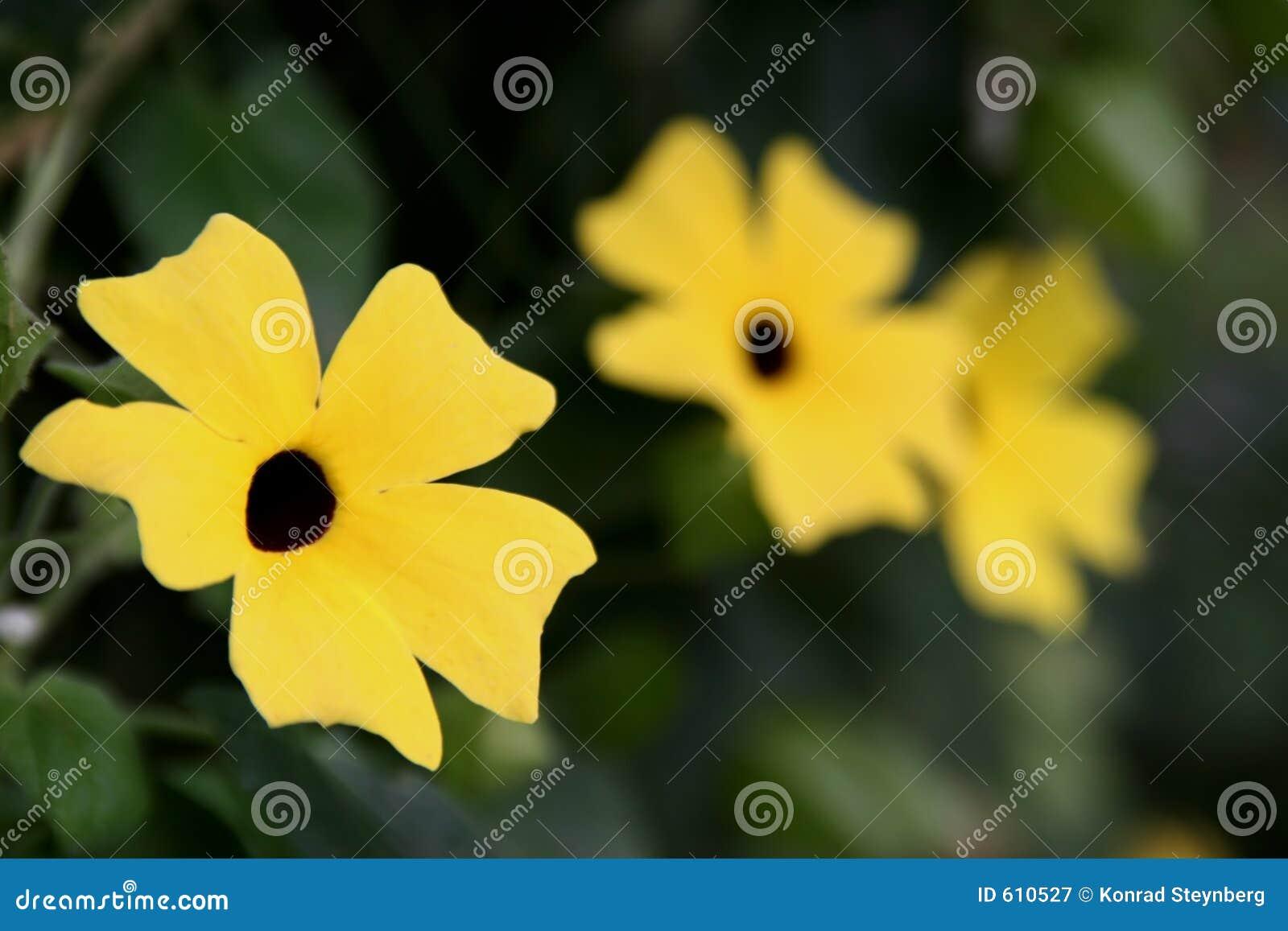 Gele serie van bloemen
