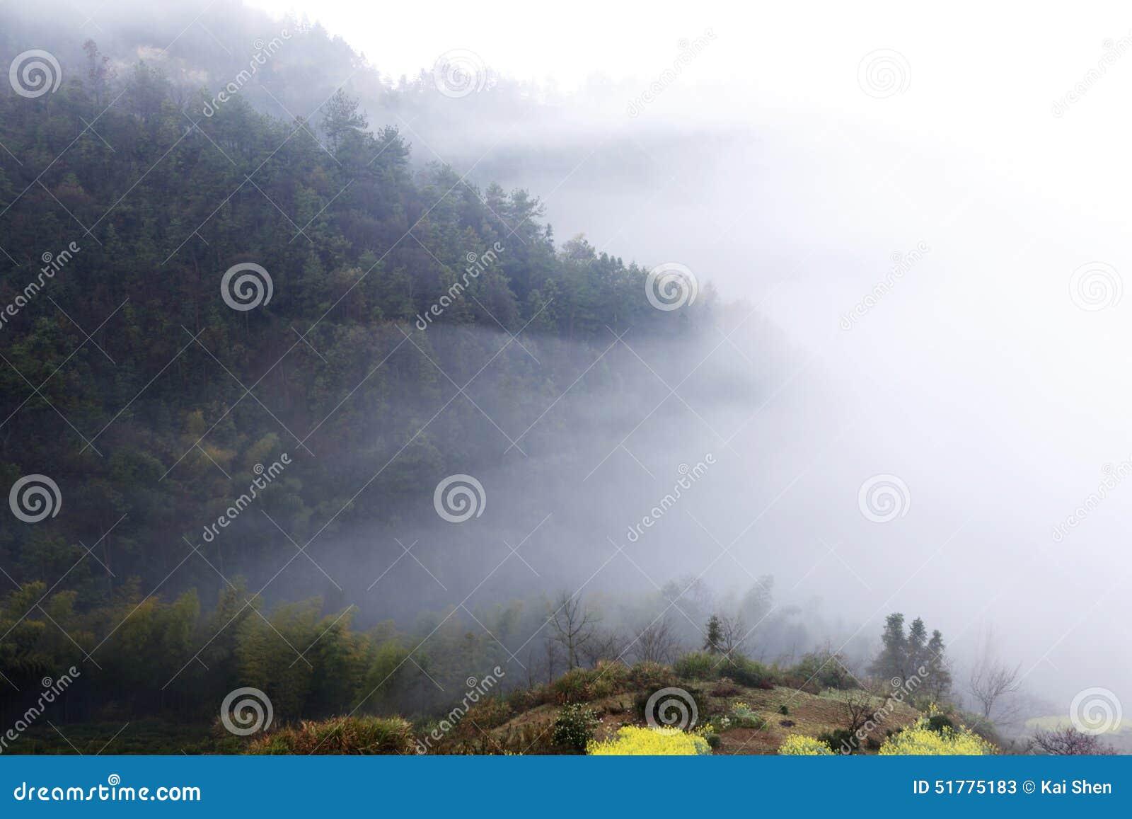Gele verkrachtingsbloem in de lente op de helling, de dekking van de bergmist