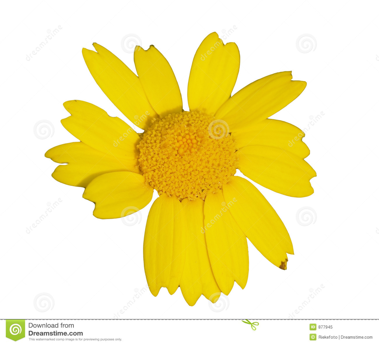 Gele wildflower